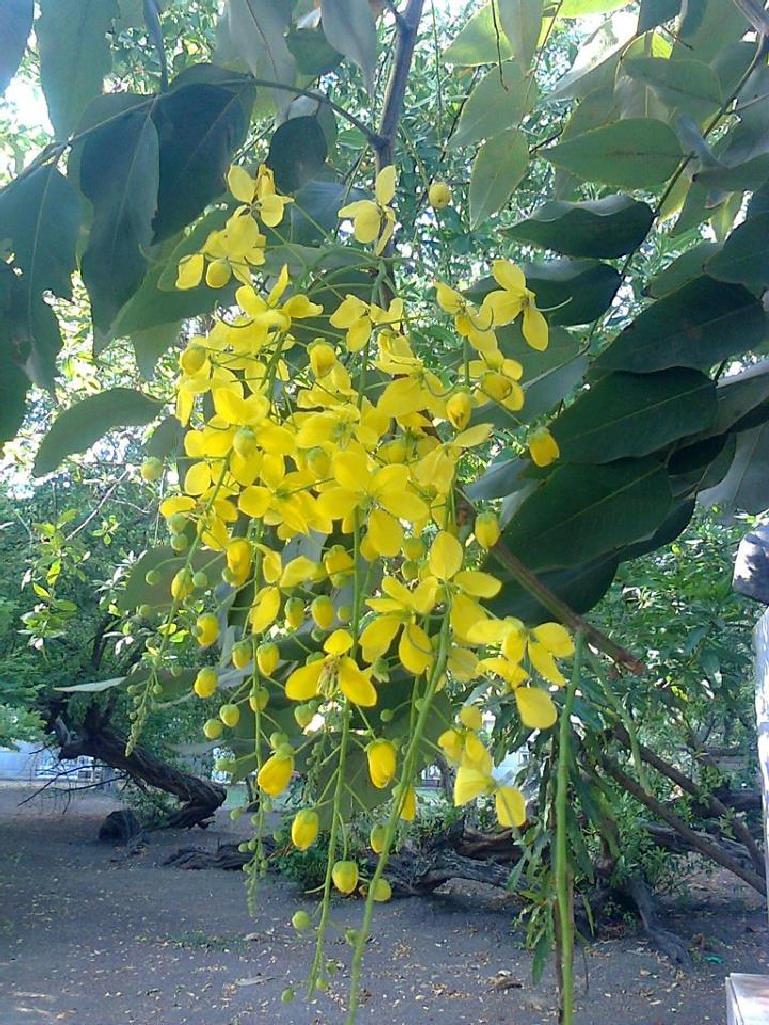 yellow flower by castariza