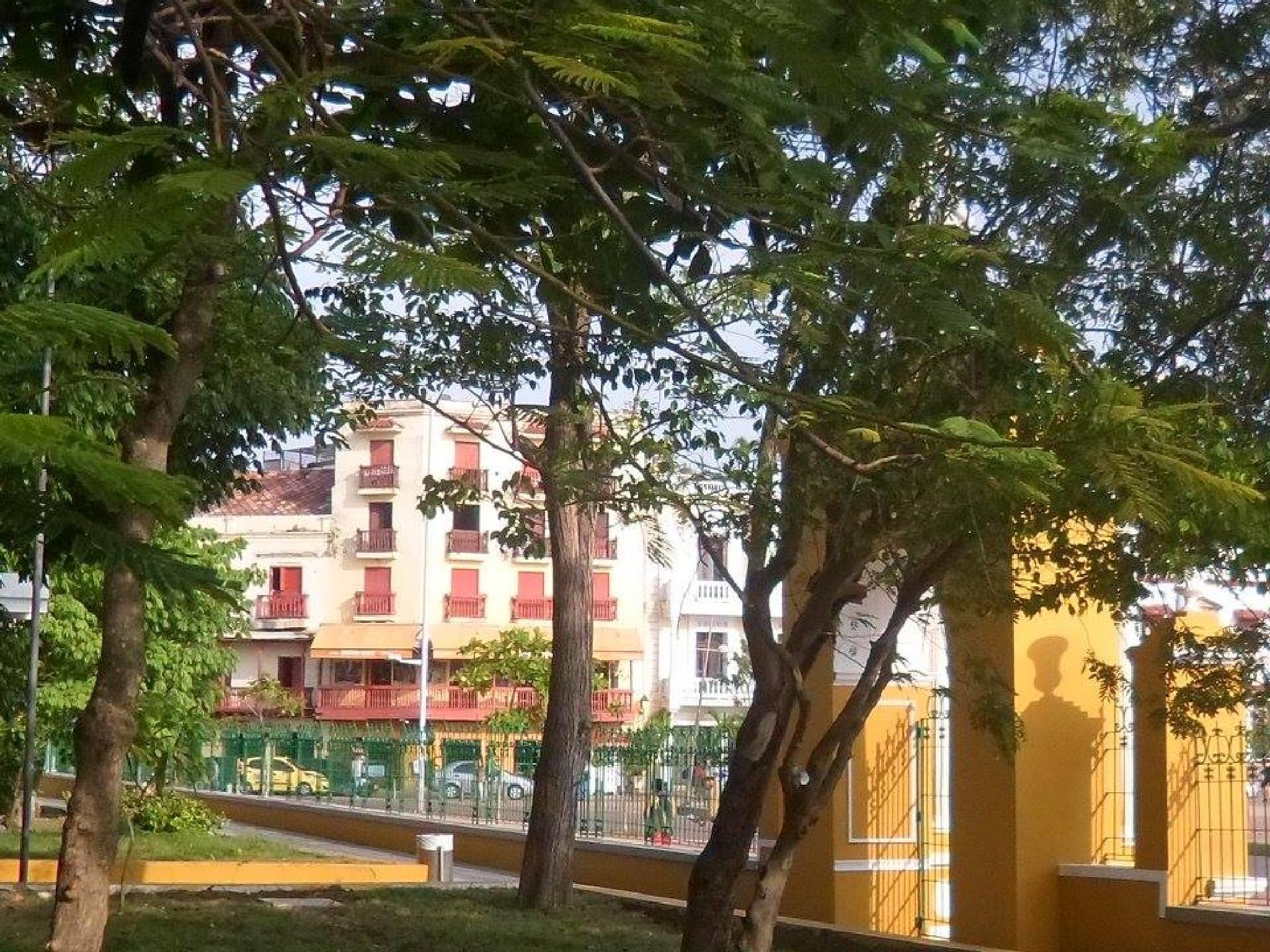 Photo in Street Photography #trees #yellow #doors