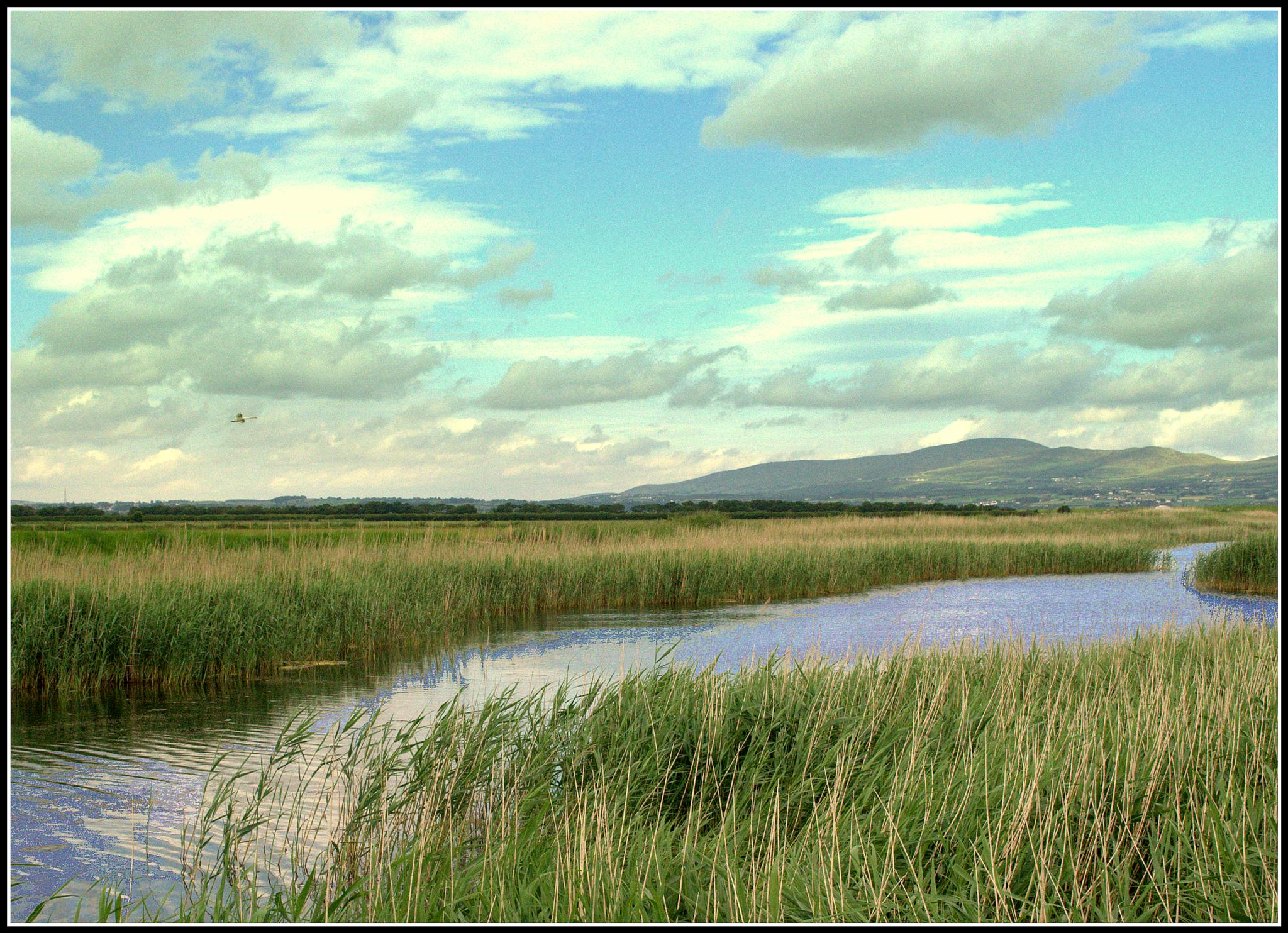 Foyle wetlands by Kenny Francis