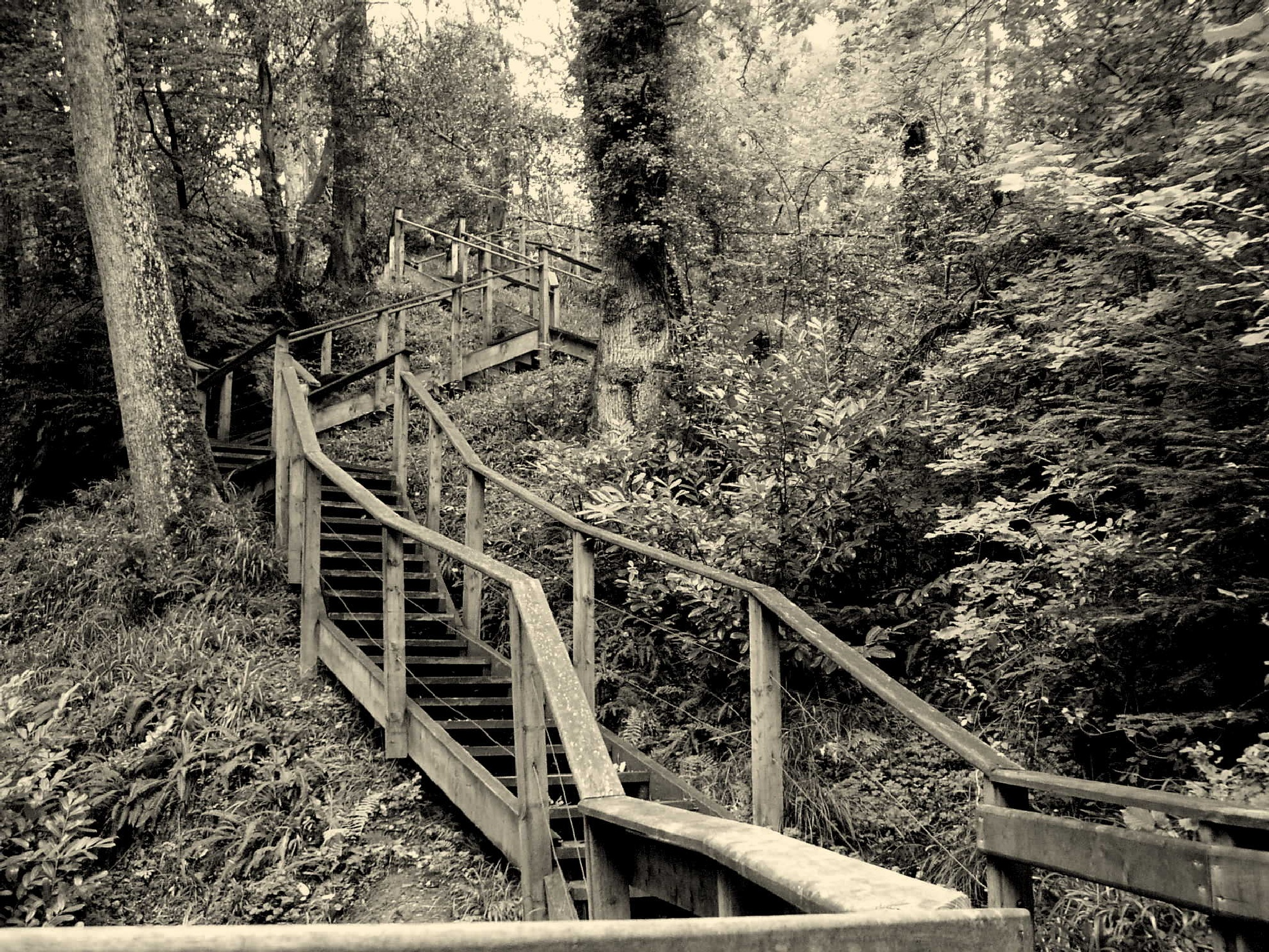 Woodland stairway by Kenny Francis