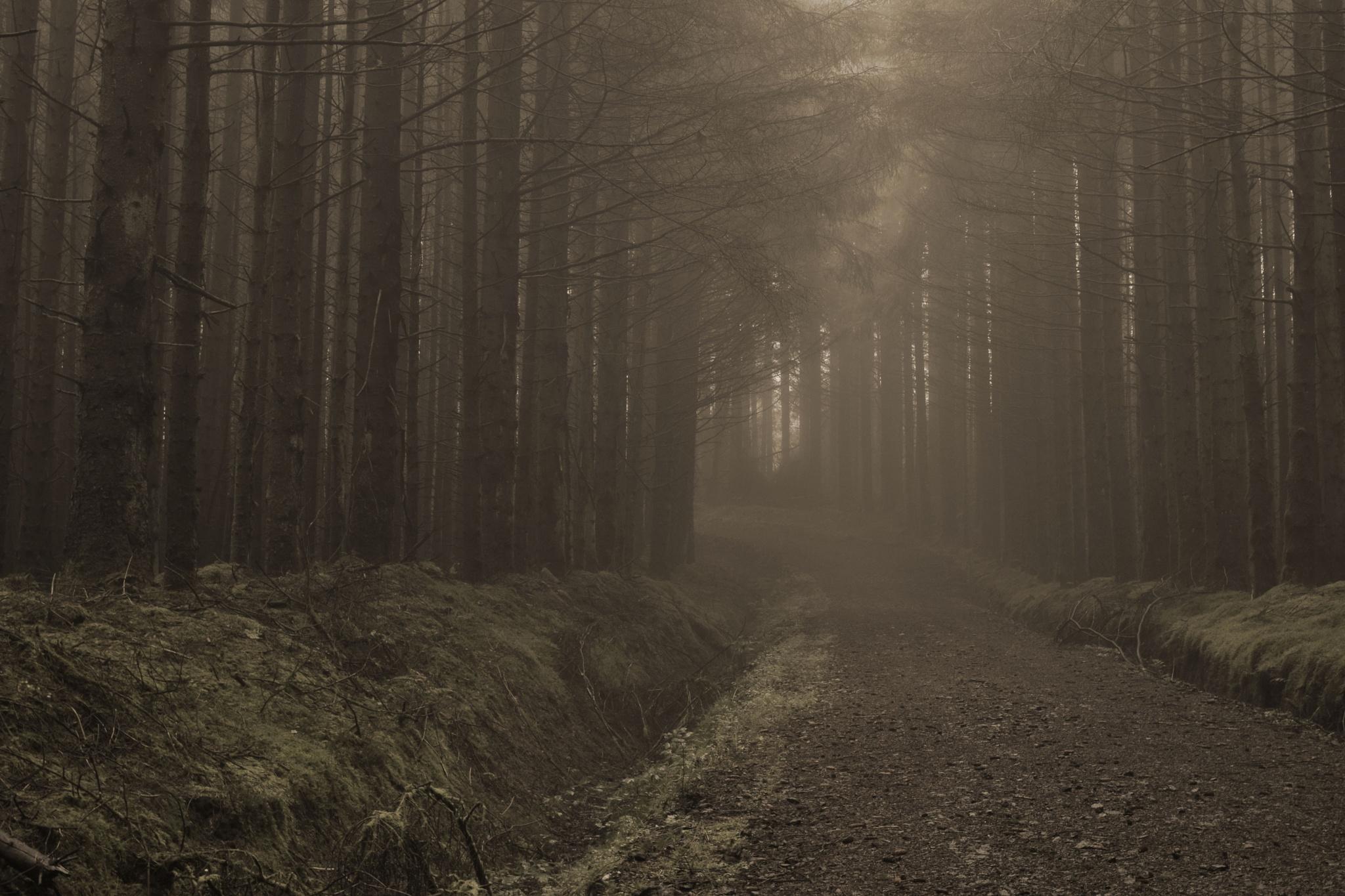 Foggy Woodland Path by Kenny Francis