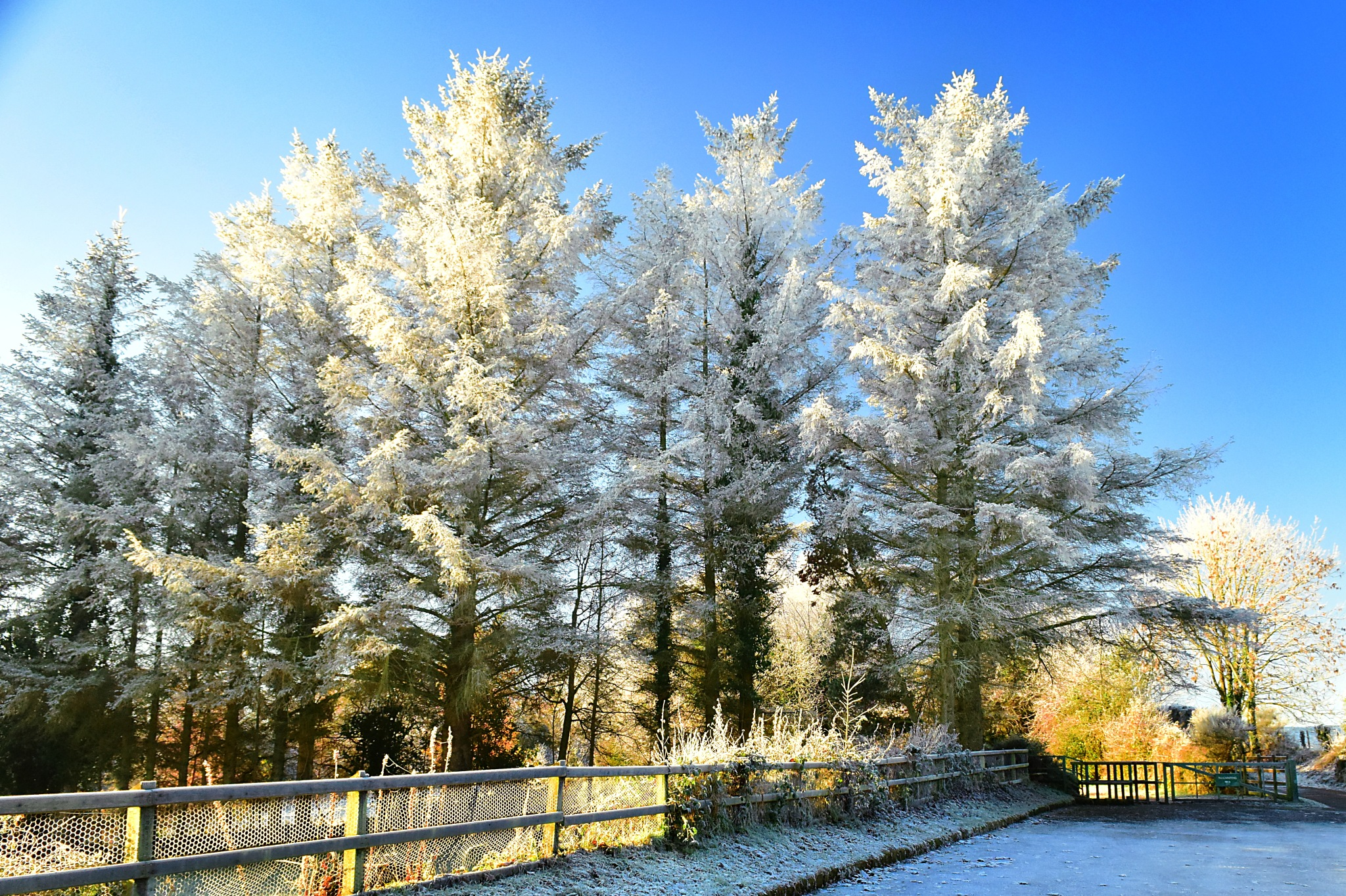 Frosty trees in low winter sun by Kenny Francis