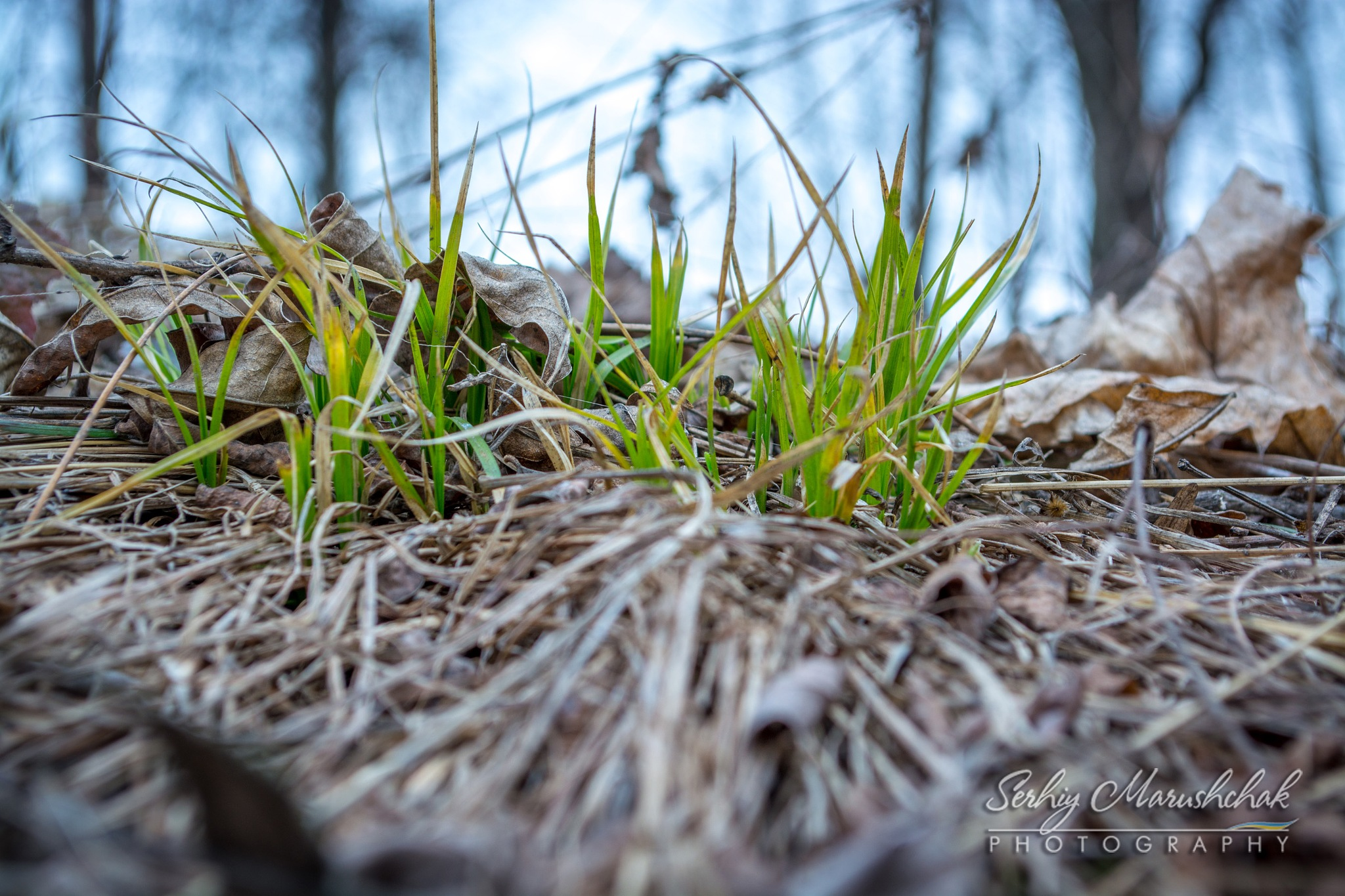 Весна. Перша трава... / Spring. The first grass... by artmars07