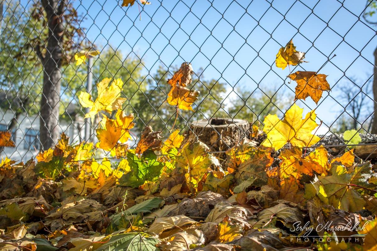 Осінній буревій на огорожі... / Autumn storm on the fence... by artmars07