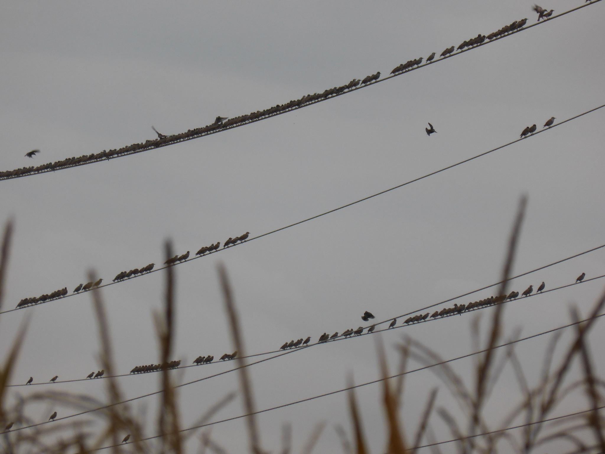 Birds by Hansjuerg Buehler