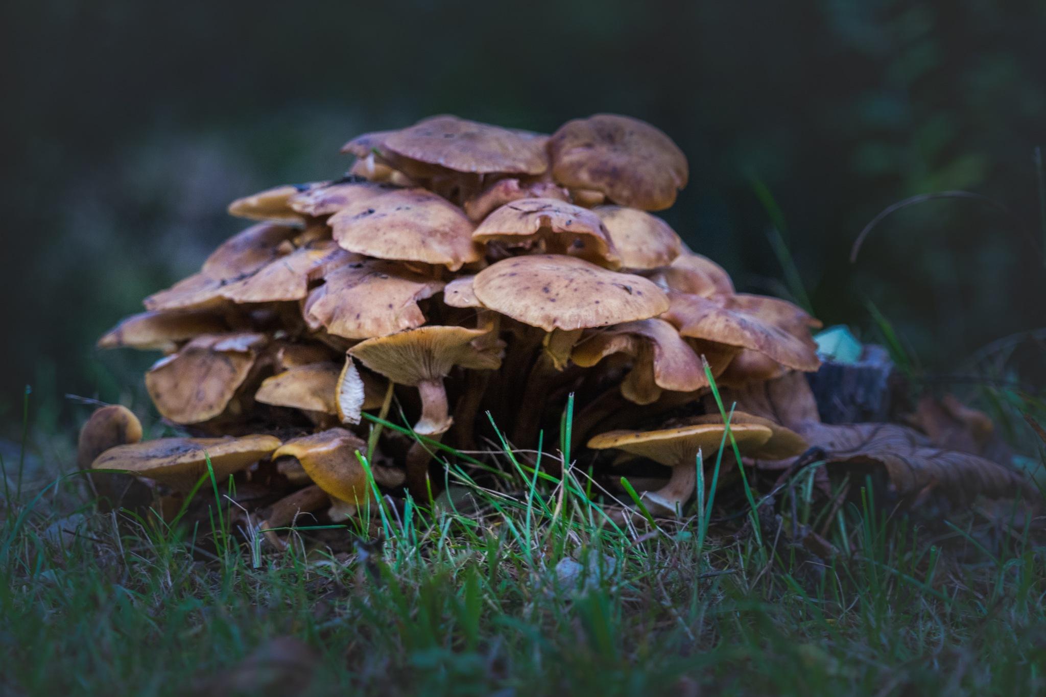 Nochmals Pilze im Überfluss by Hansjuerg Buehler