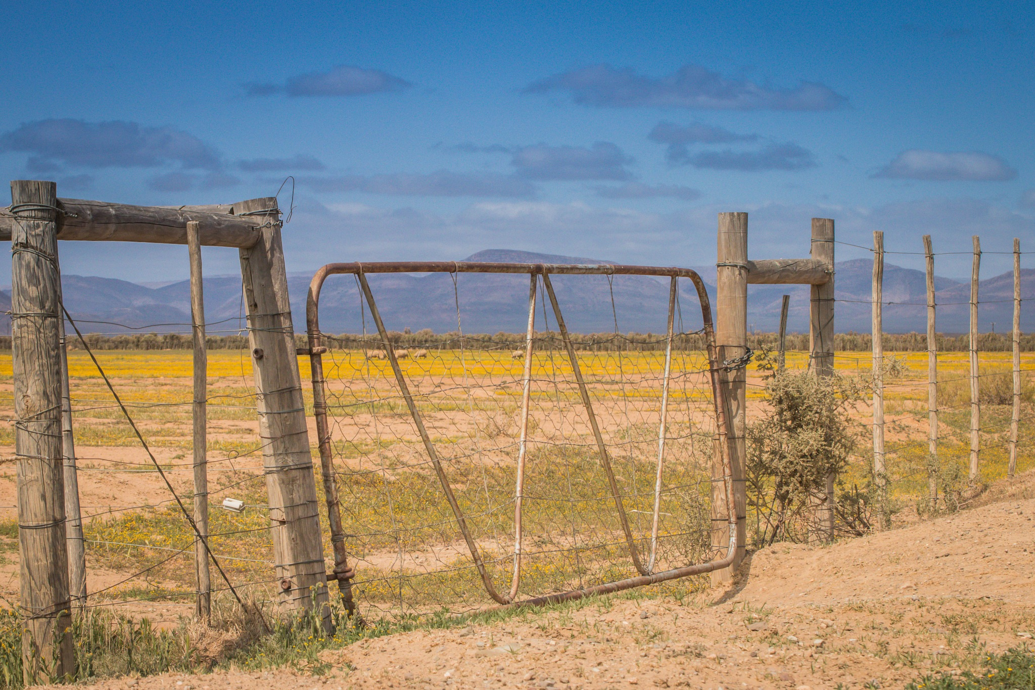 The Gate by Lanie Badenhorst