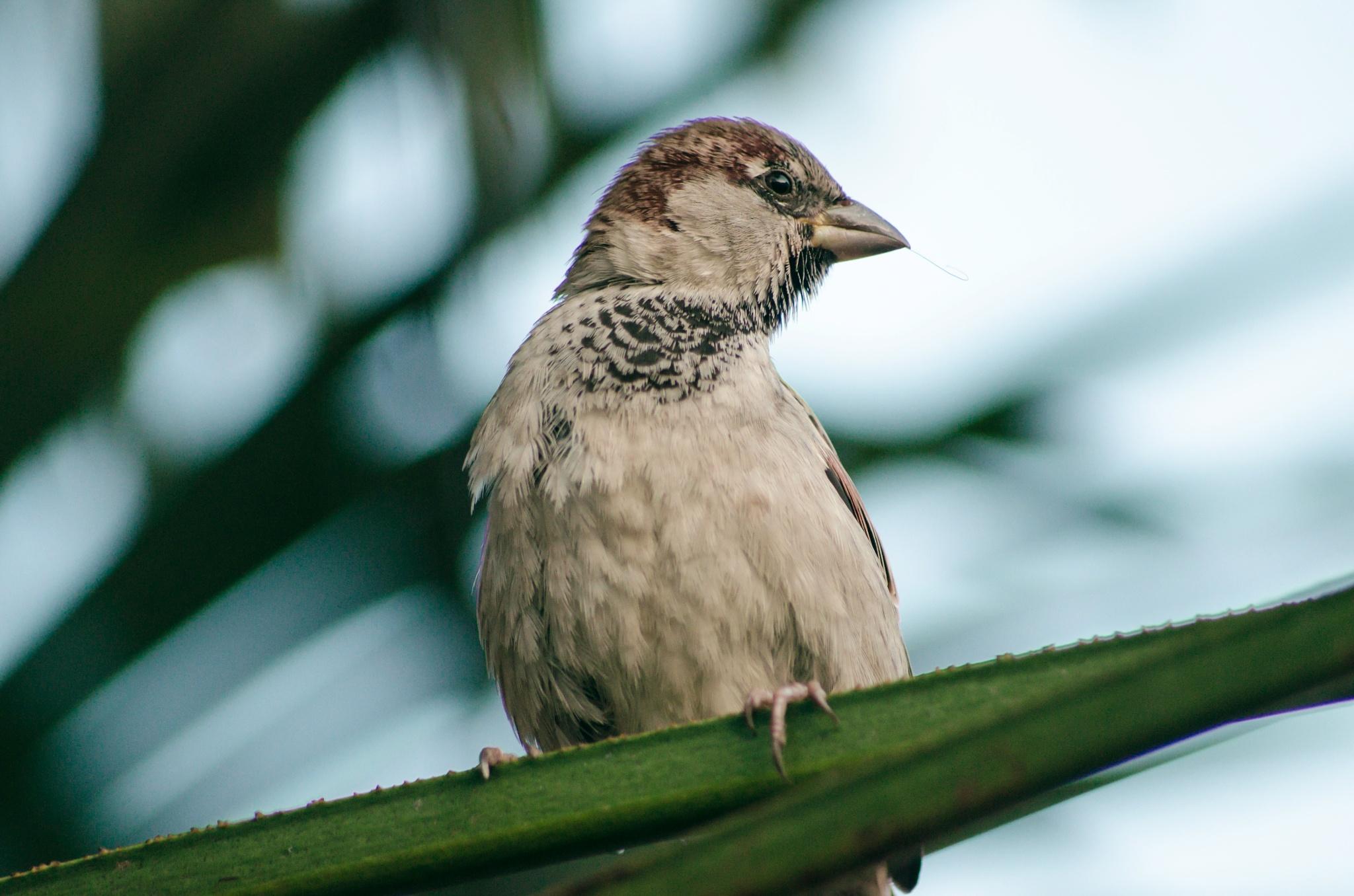 Birdy by Julija M.