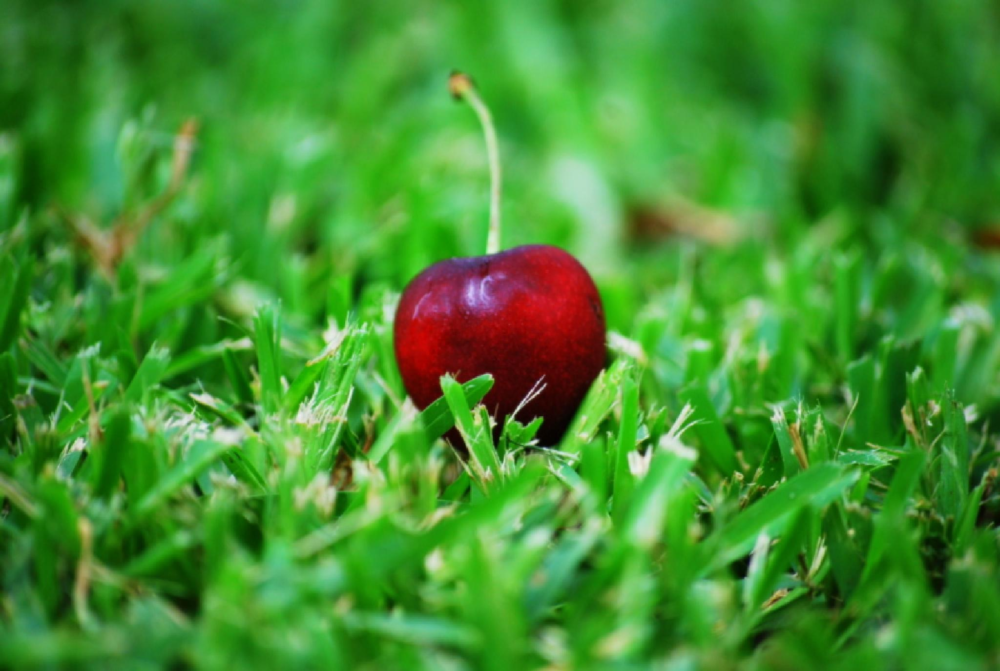 Cherry by Shannon Smith