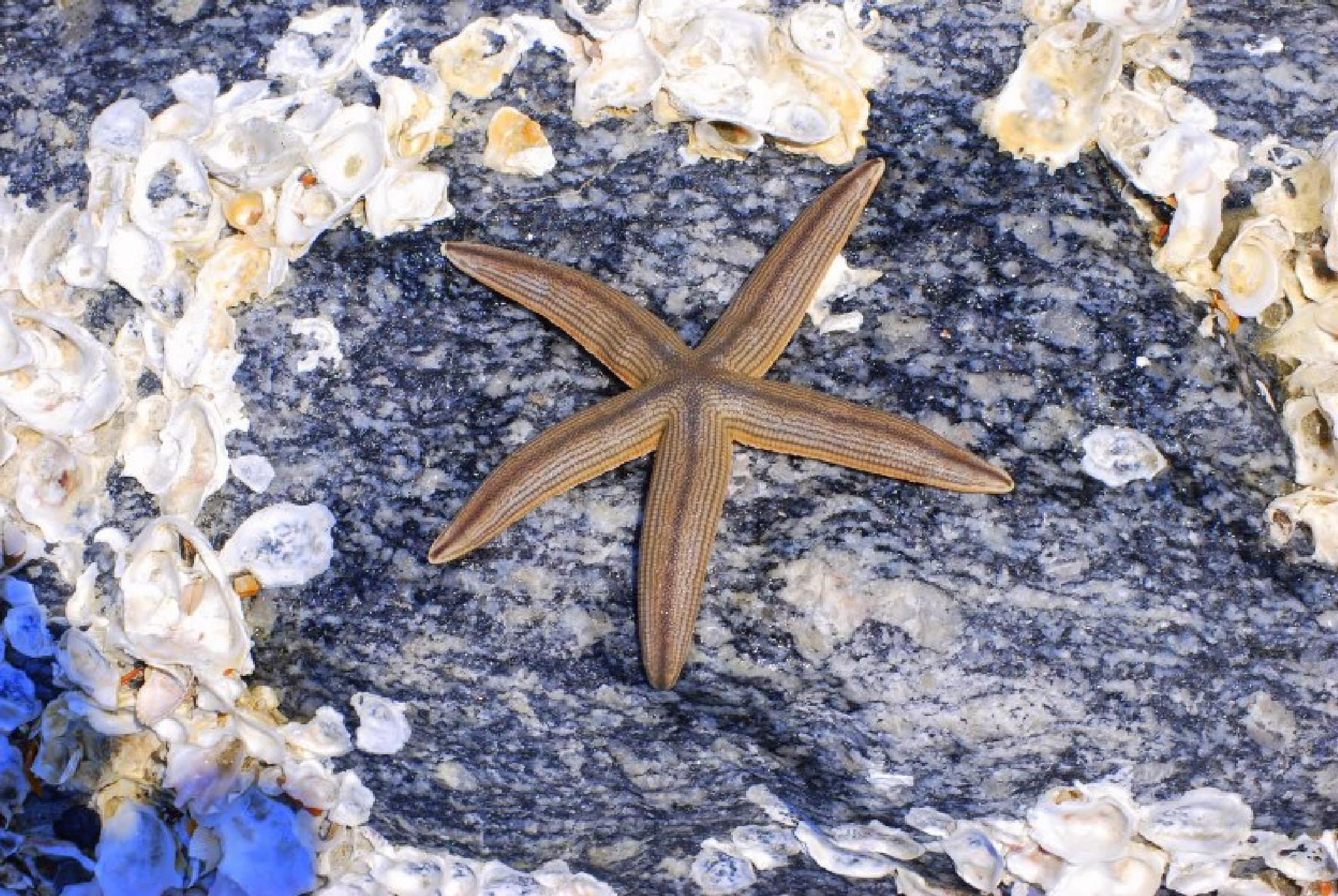 Starfish by Shannon Smith