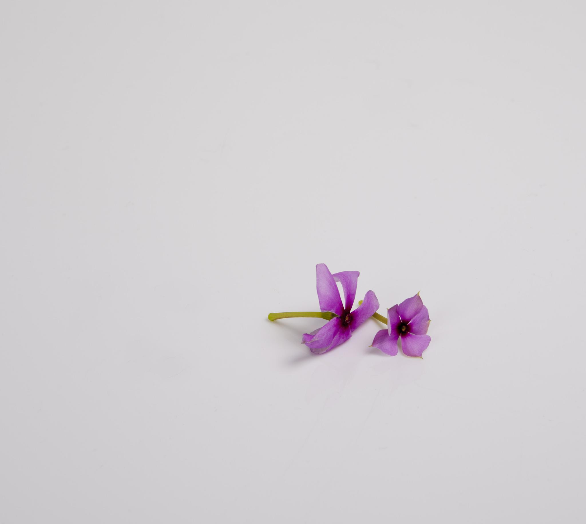 Photo in Nature #nayantara #flower #pair