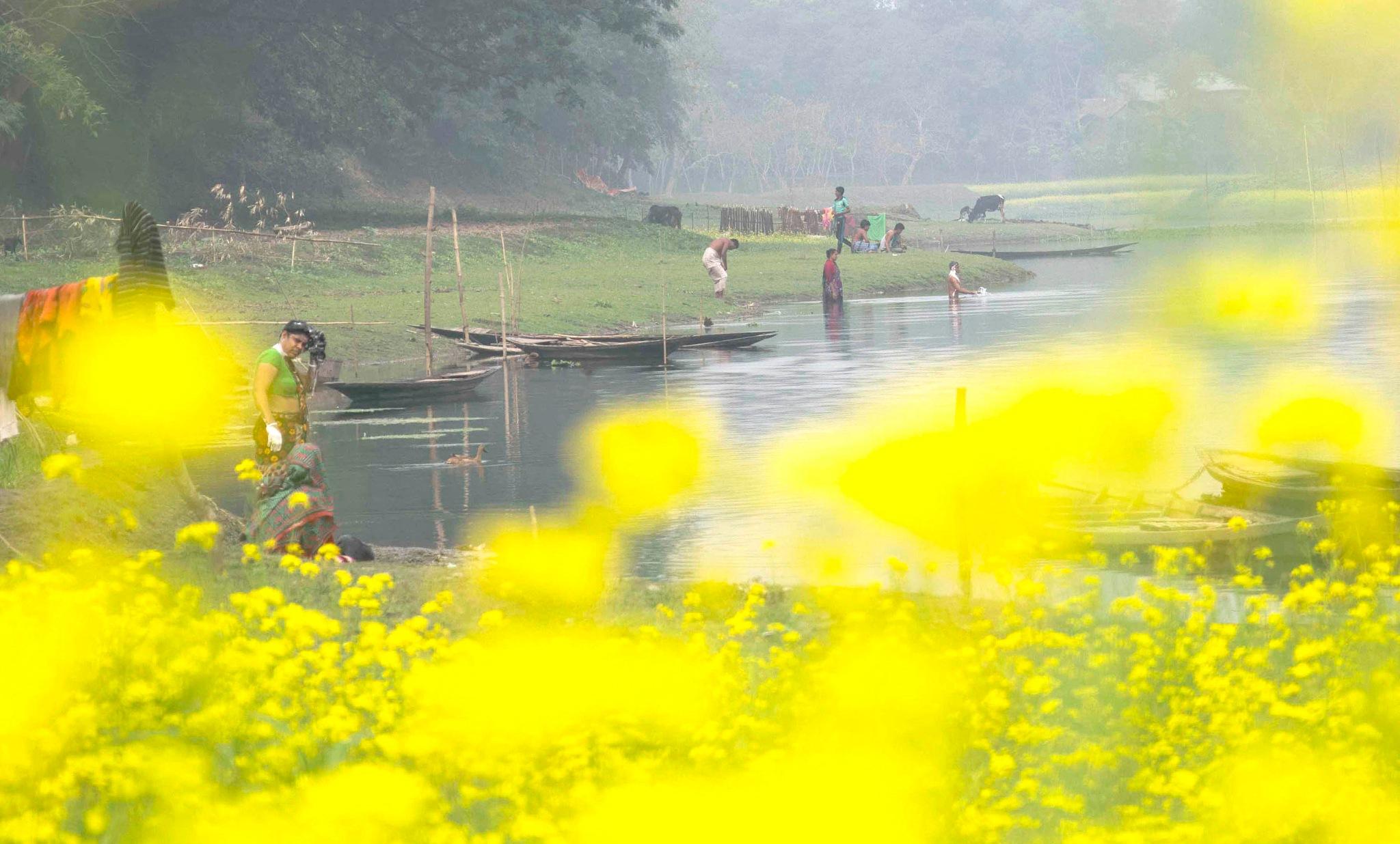 mustard flower by alinoton