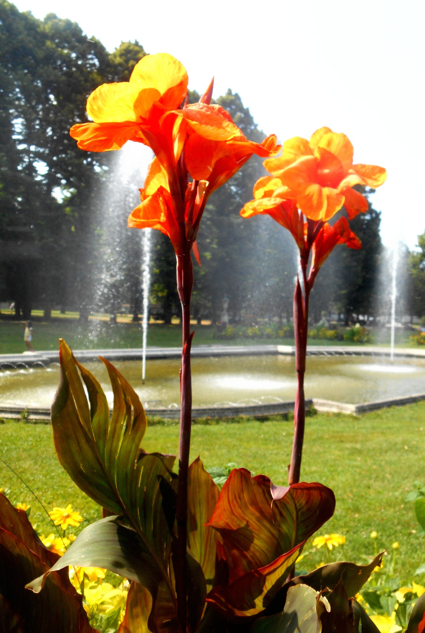 Flowers and fountains - it must be summer! by clairettegardner