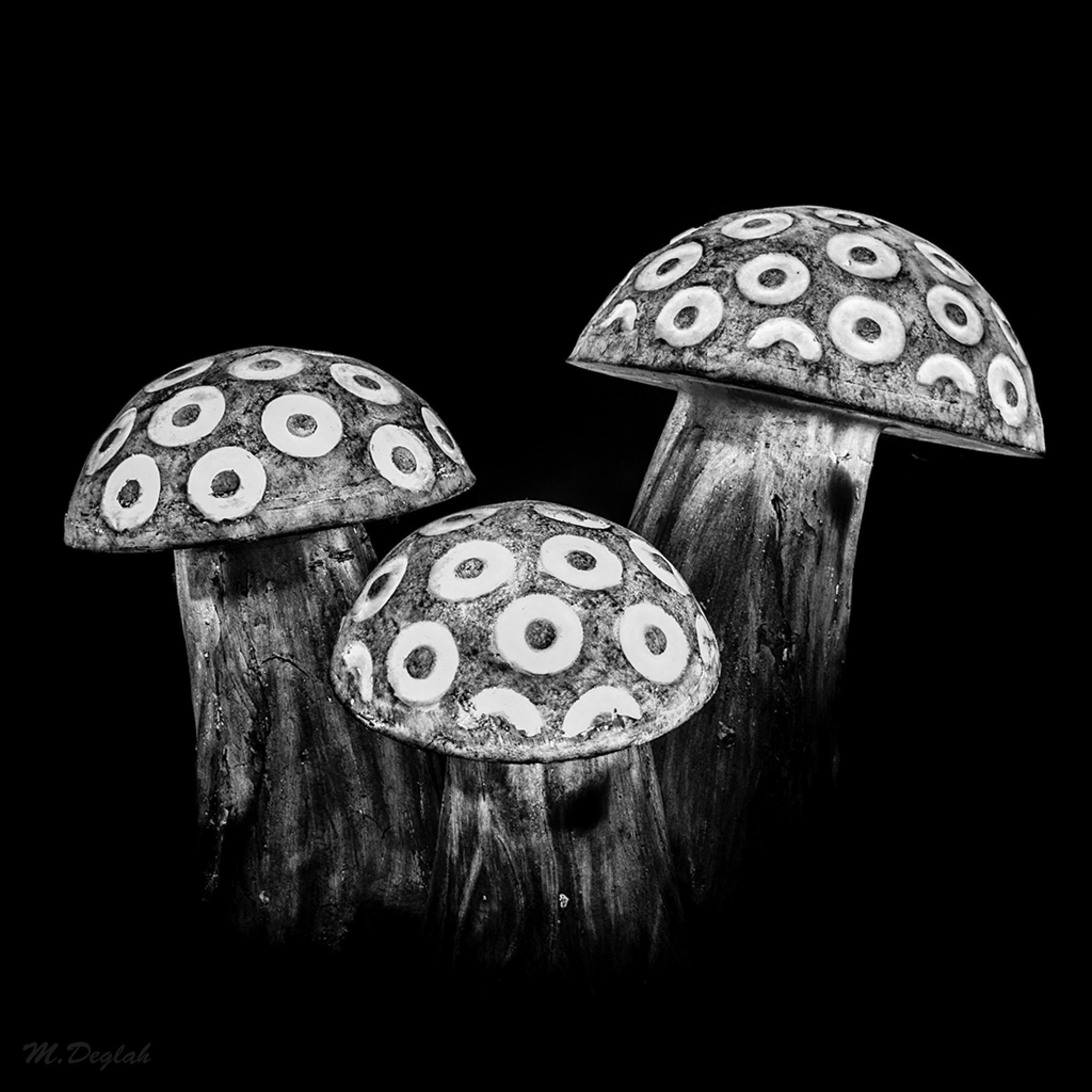 Mushroom by Mohammad Al Deglah