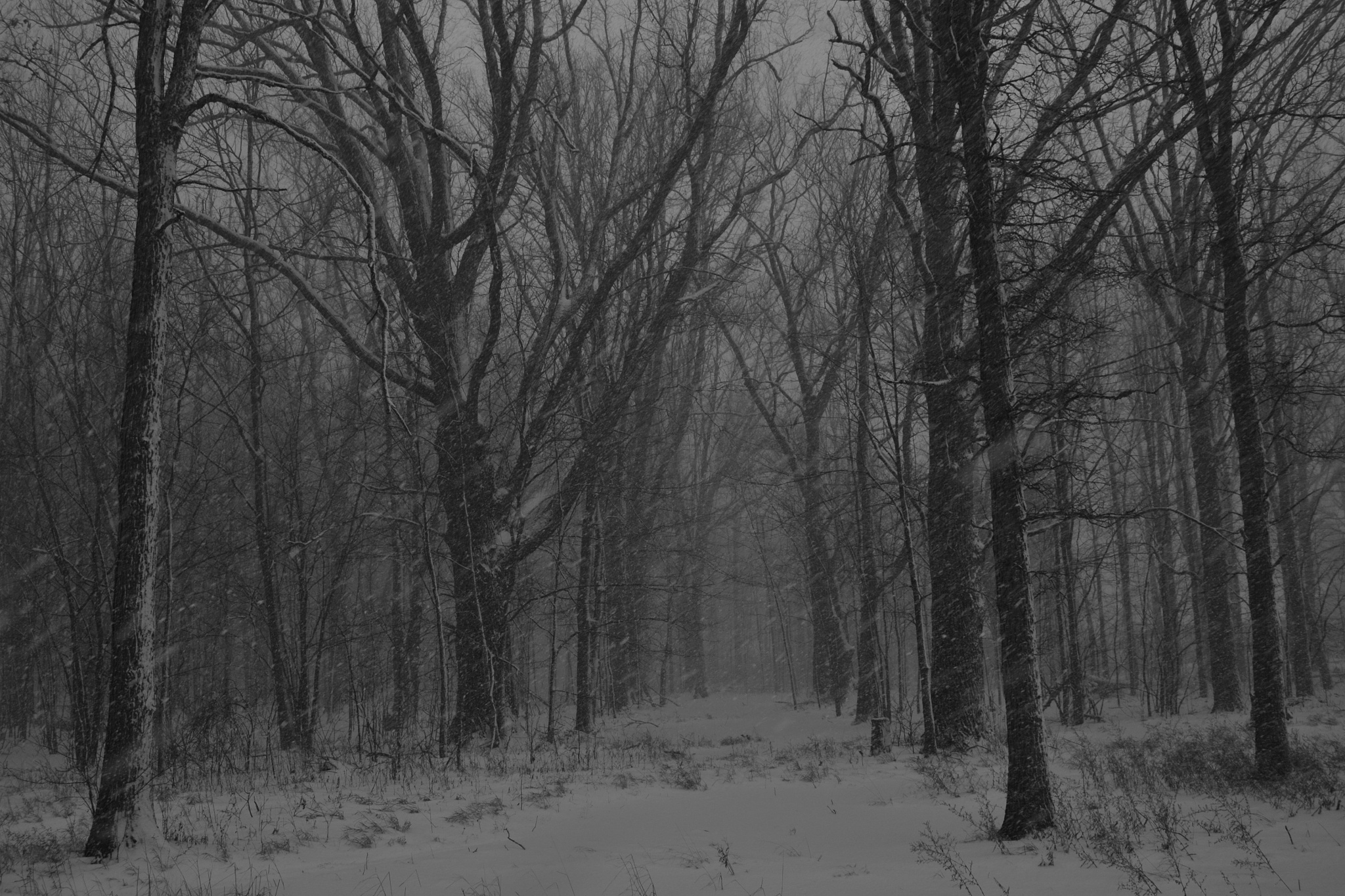 A white out by Thom FitzRandolph