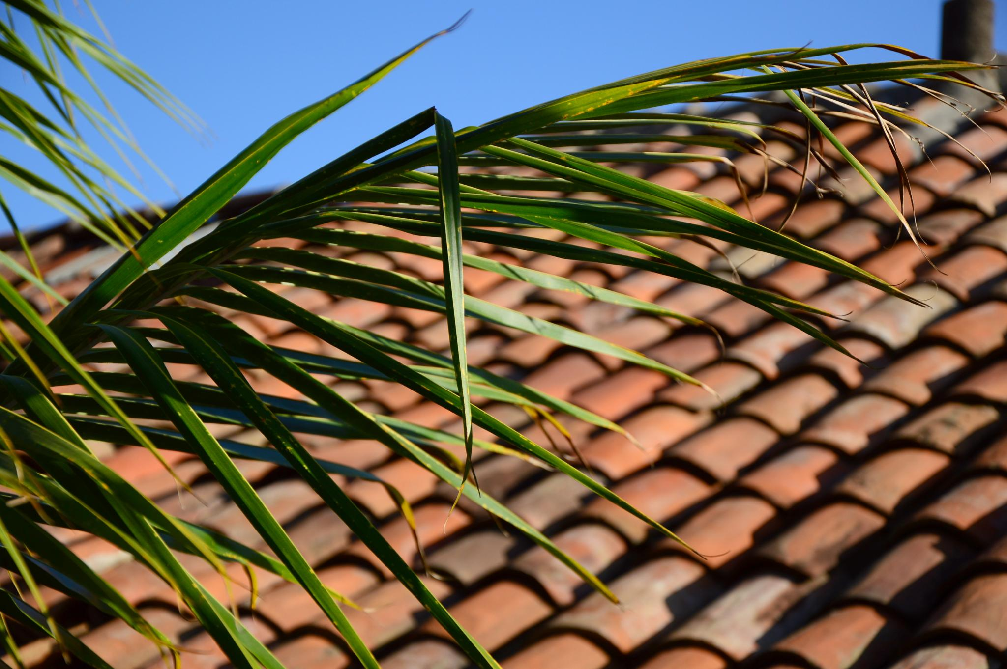 Palm leaves and tiles by Ives Martinez