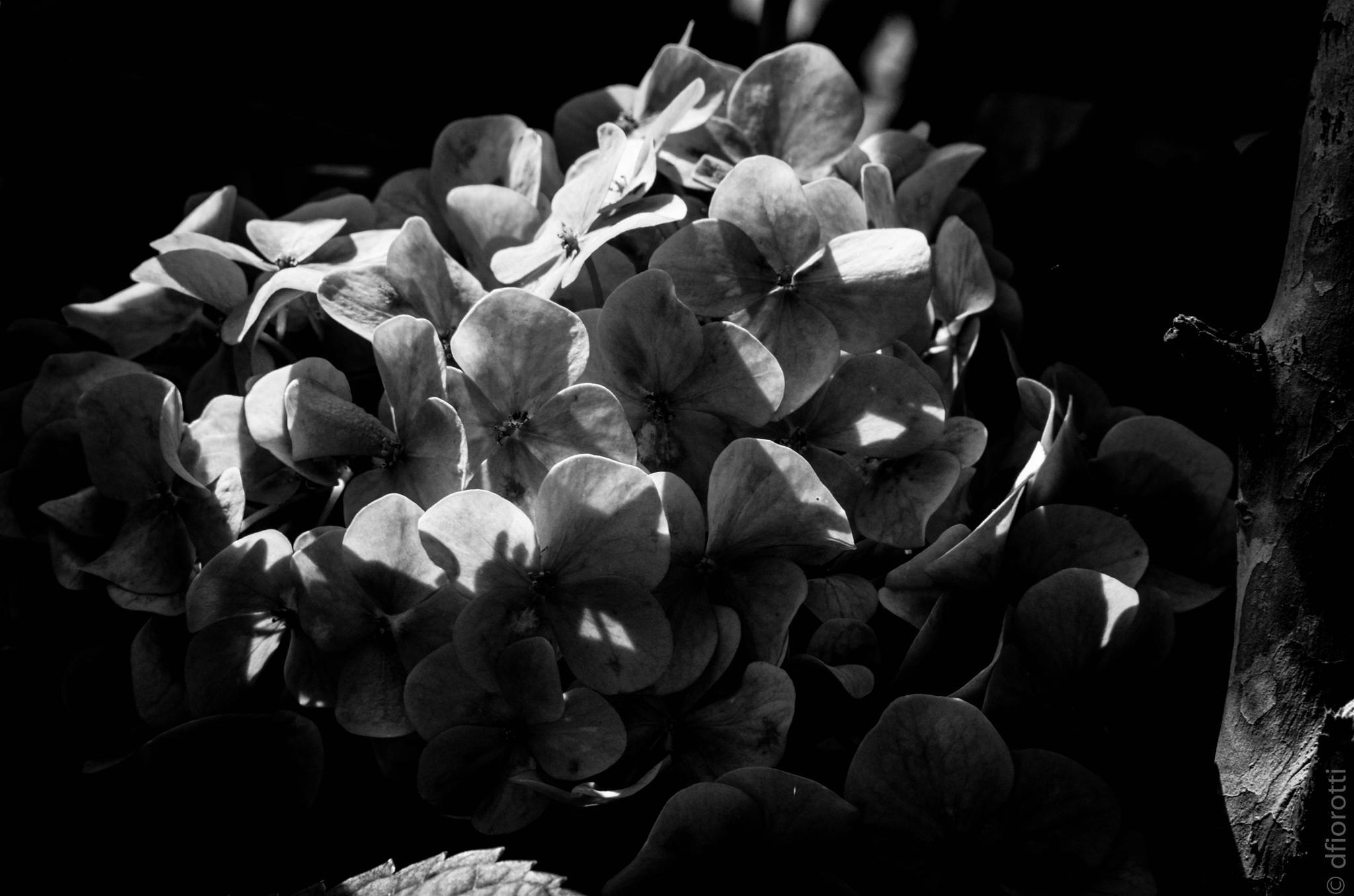 Nocturne by Devair Fiorotti