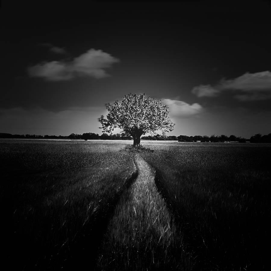 Tree by LuGiais