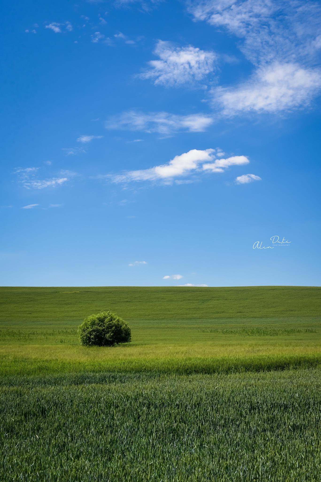 Joy in the field by alin.duta74