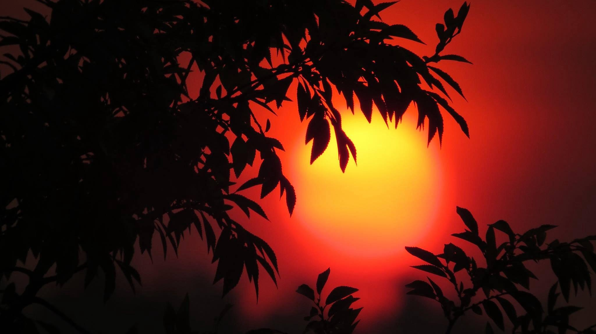 Sunset through the leaves by soulofcentralcoast