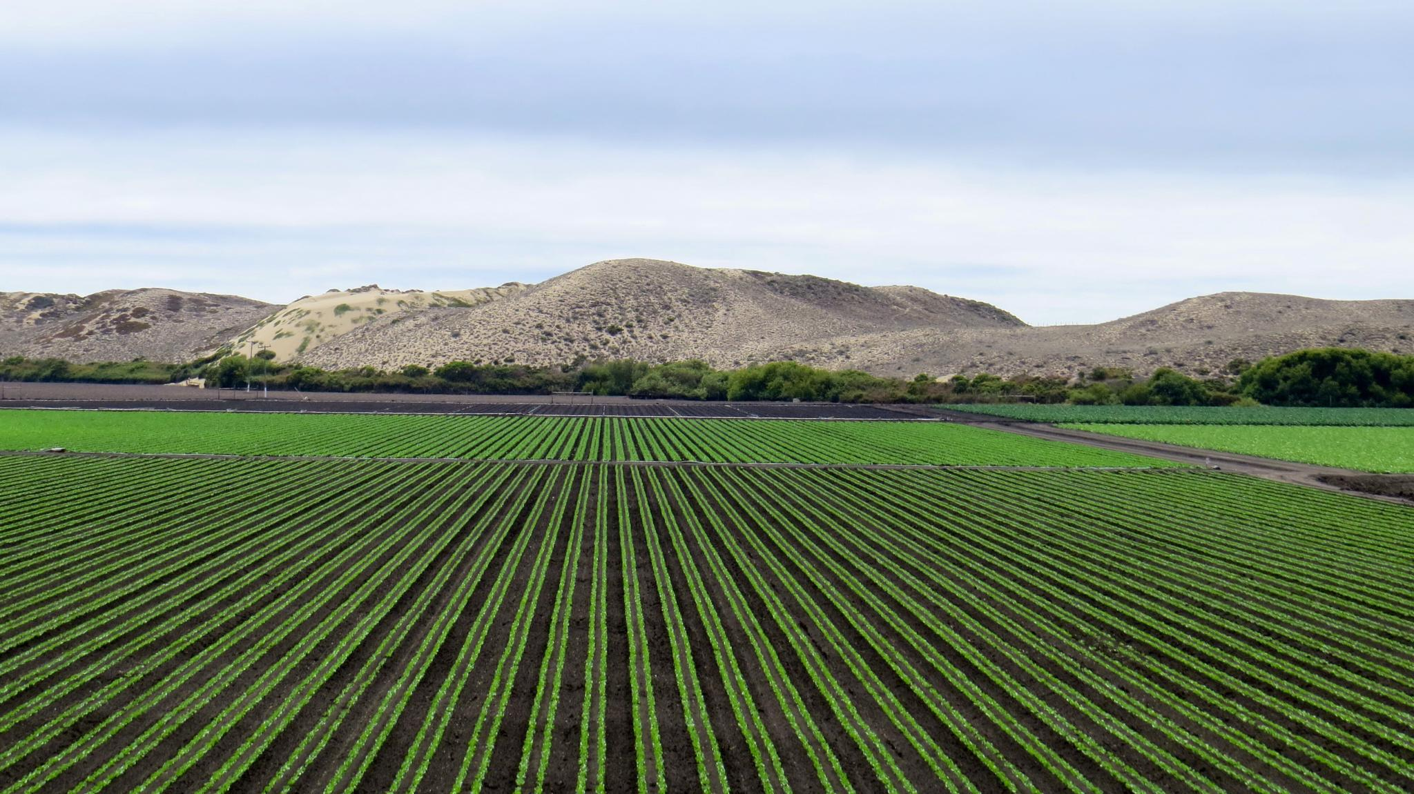 Fields by the Sea - Marina CA by soulofcentralcoast