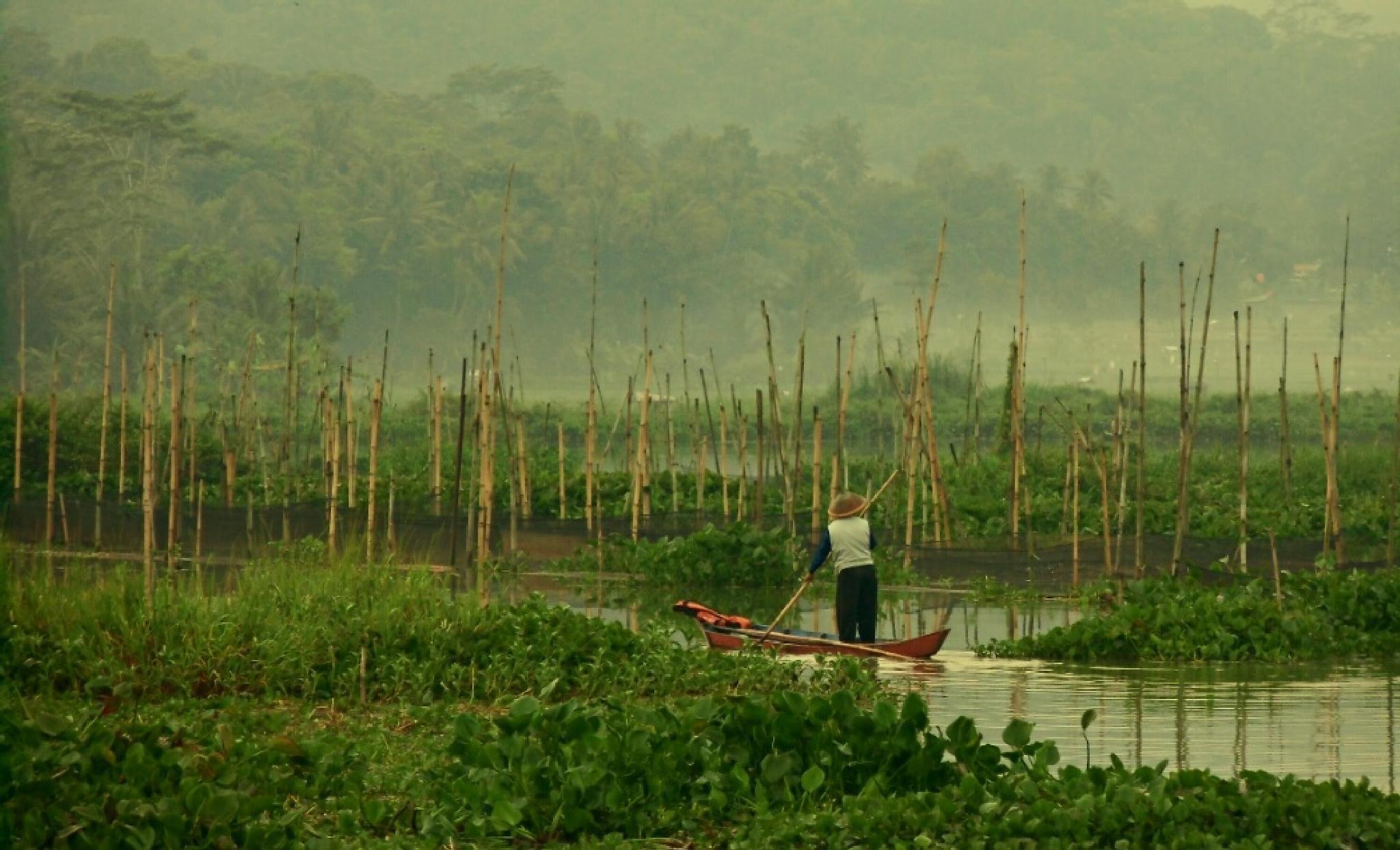 swamp fishing activities by suhartono