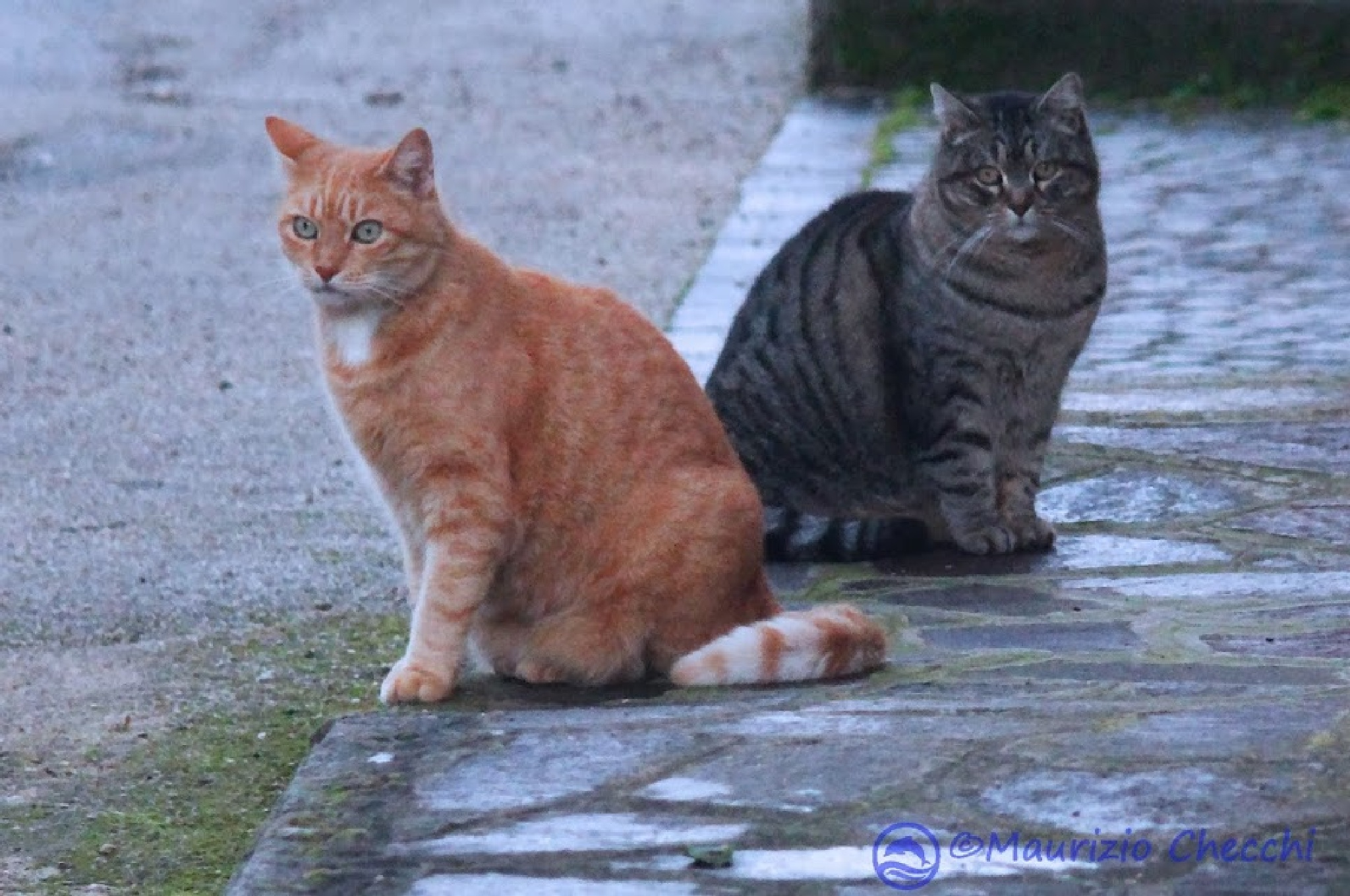 cats perplexed by maurizio
