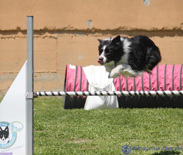 Flying dog by maurizio