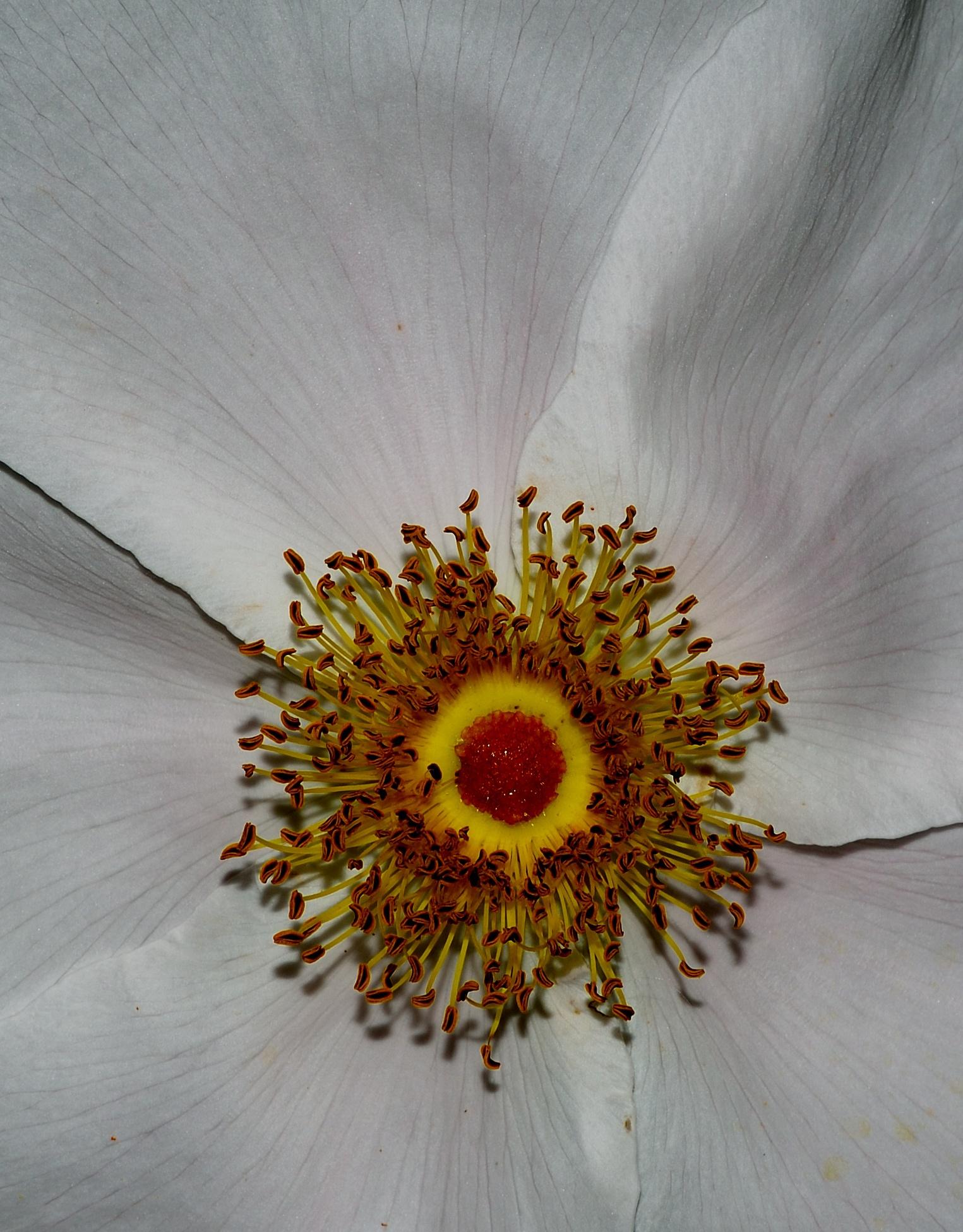 Flower 7 by Bret