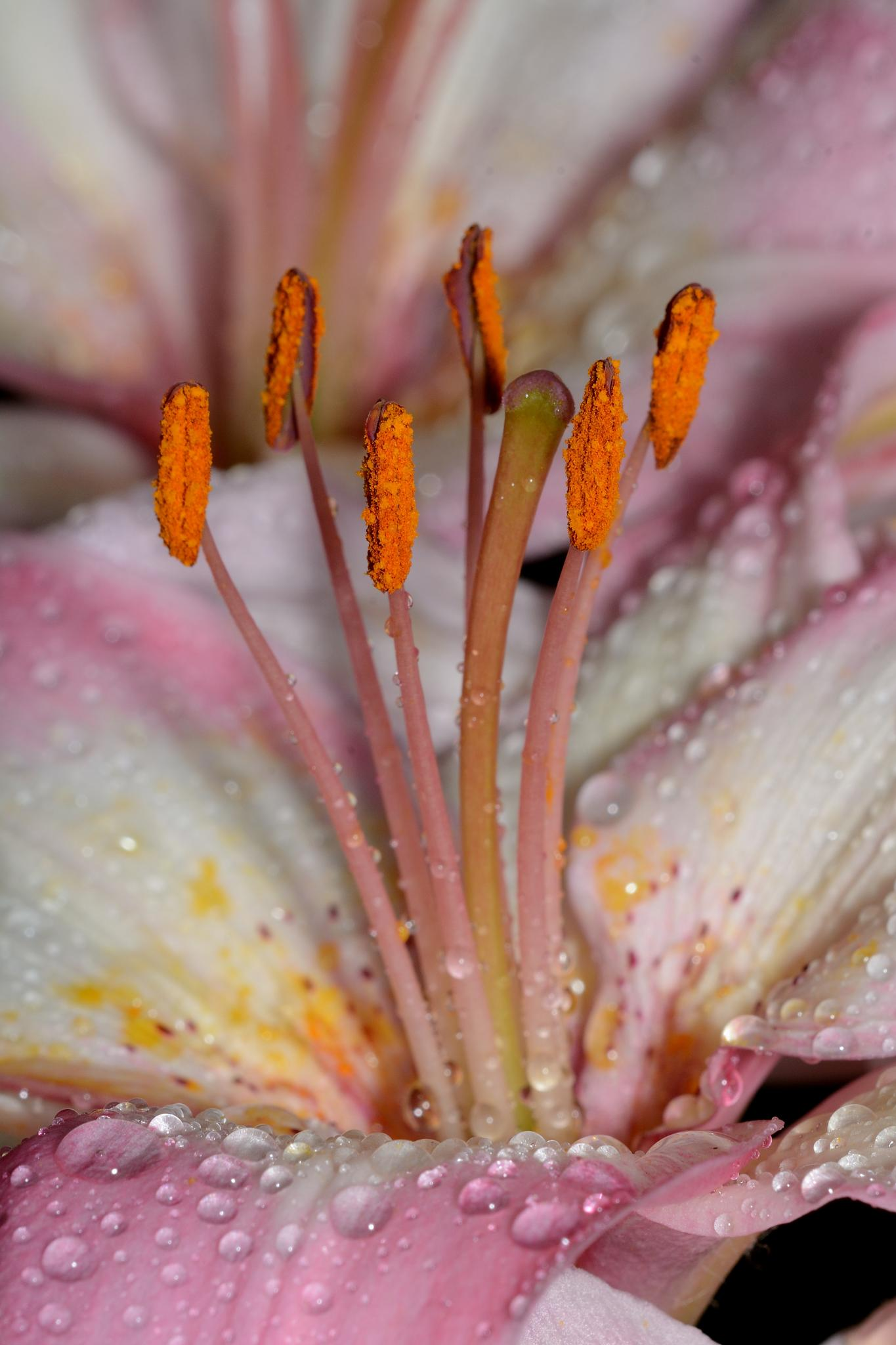 Flowers and rain by Bret