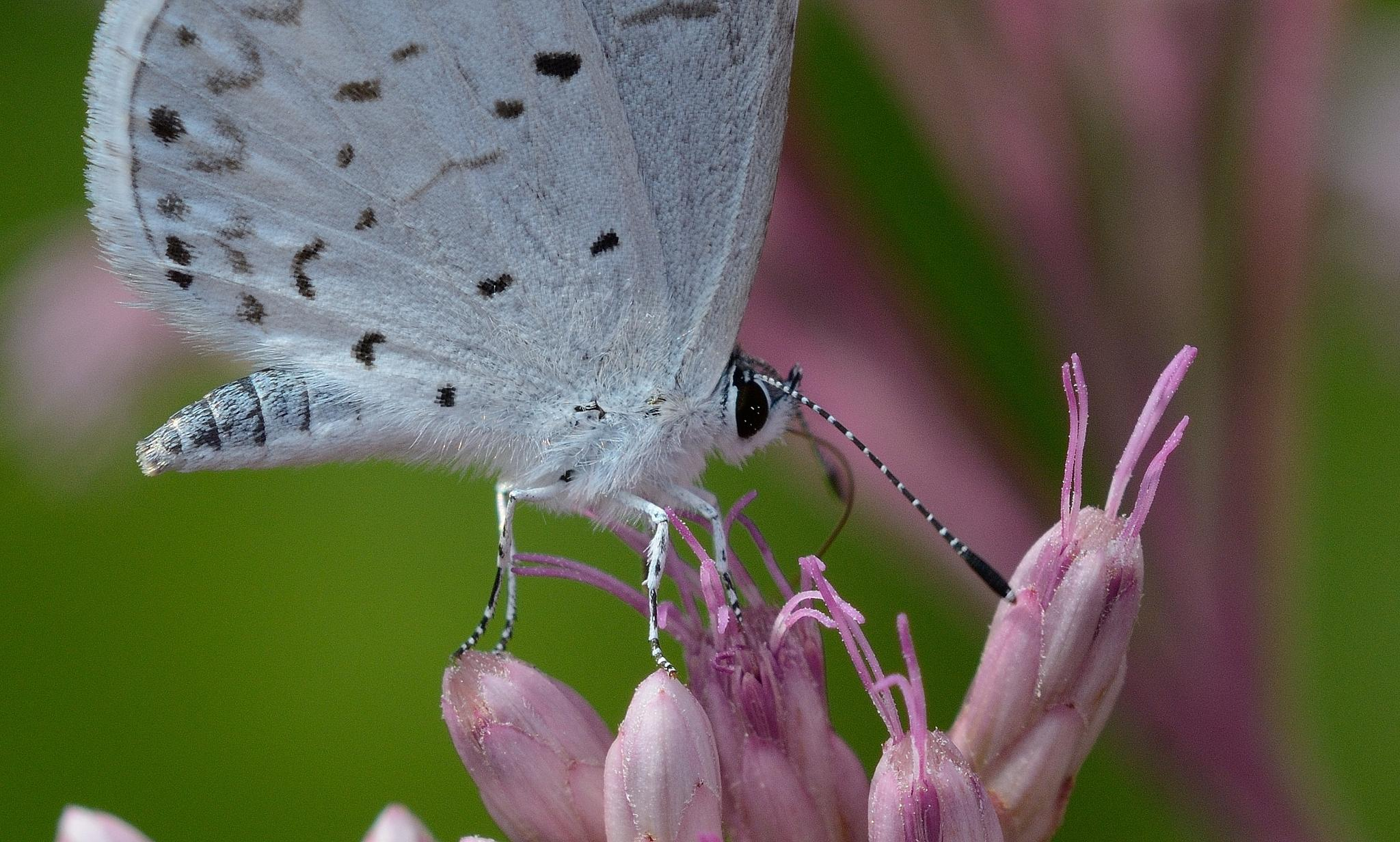 A very small Butterfly by Bret