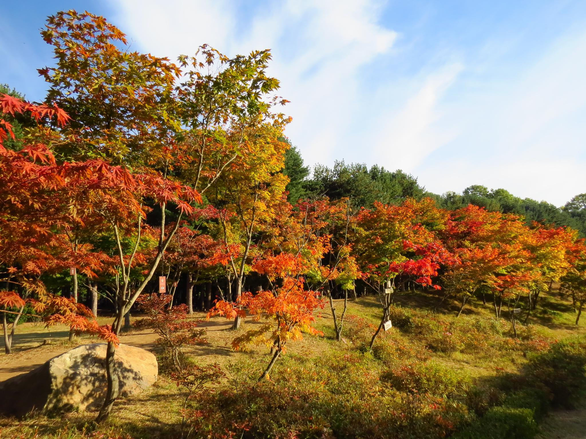 Autumn in South Korea by Takeo T.