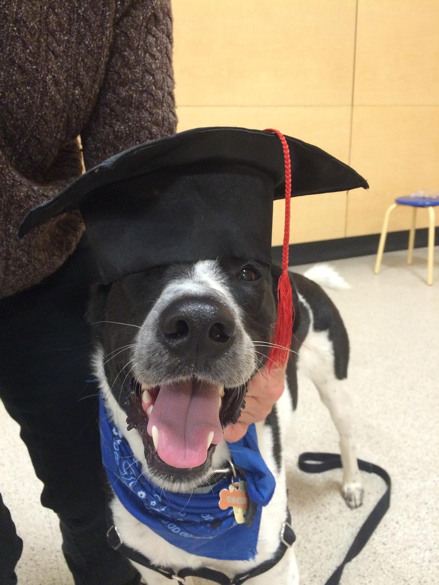 Taco graduated! by kimpark421