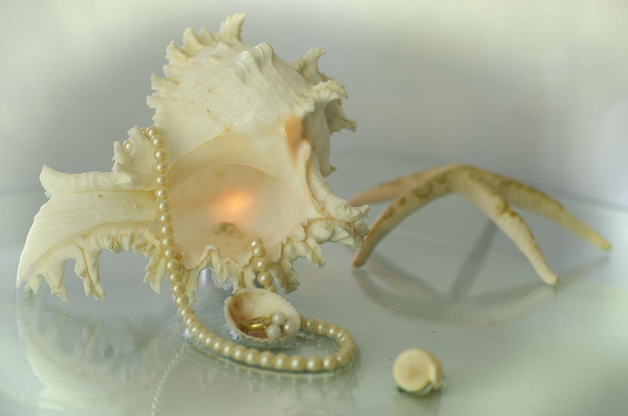 """""""Seas Treasures"""" by Beverley Pohlner"""