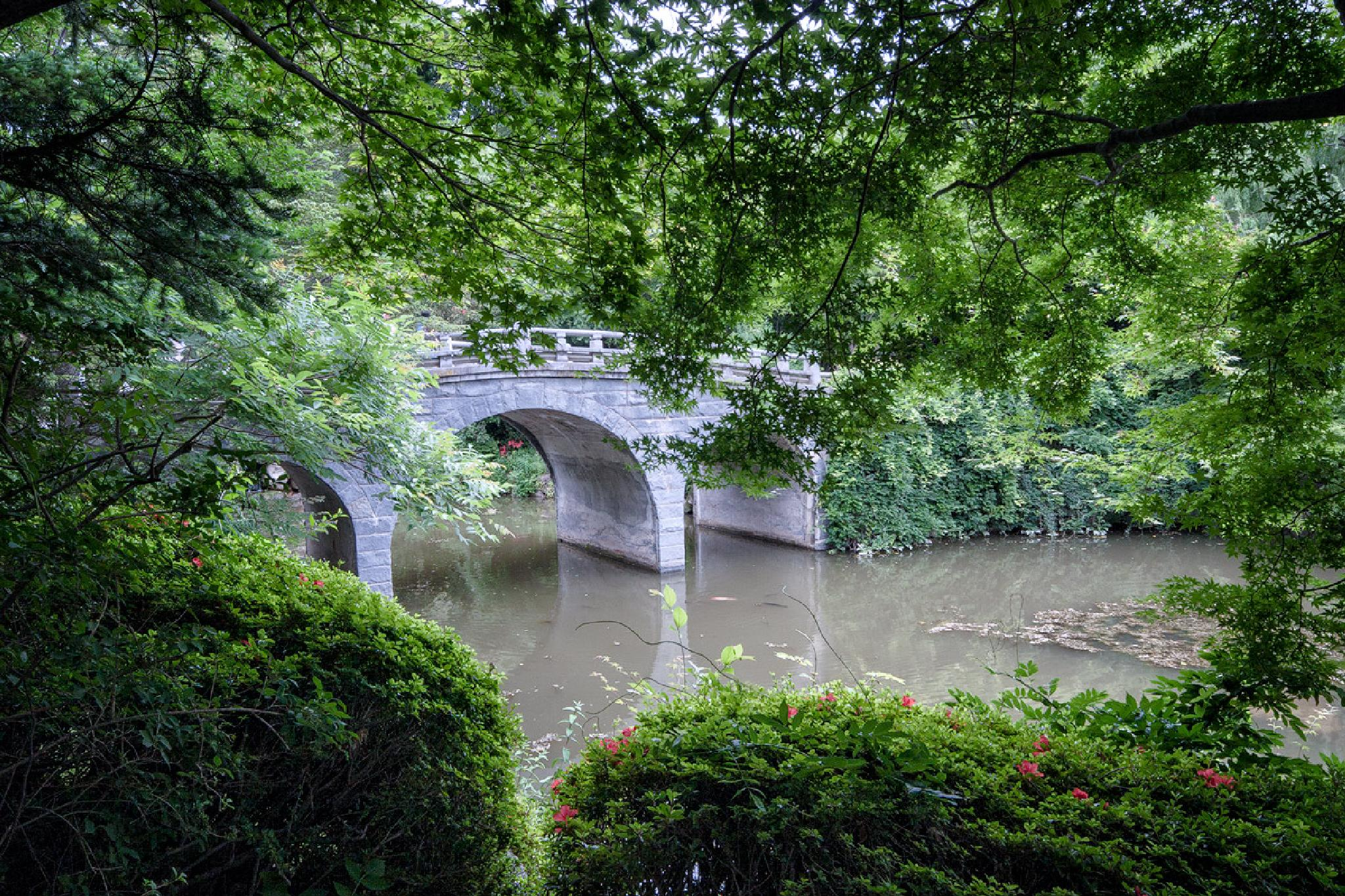 Bridge Over Calm Waters by dinajona