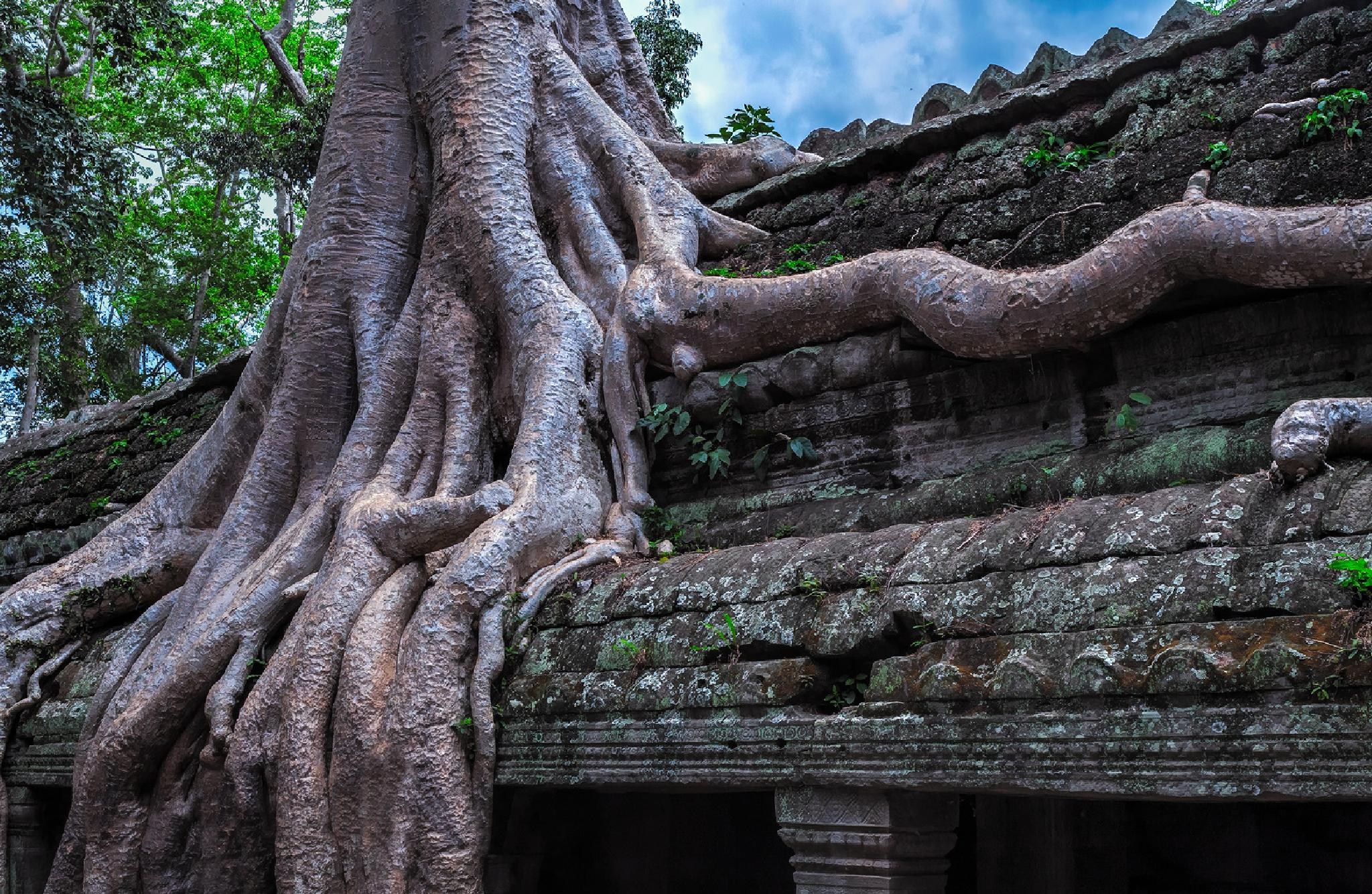 Ta Prohm by dinajona