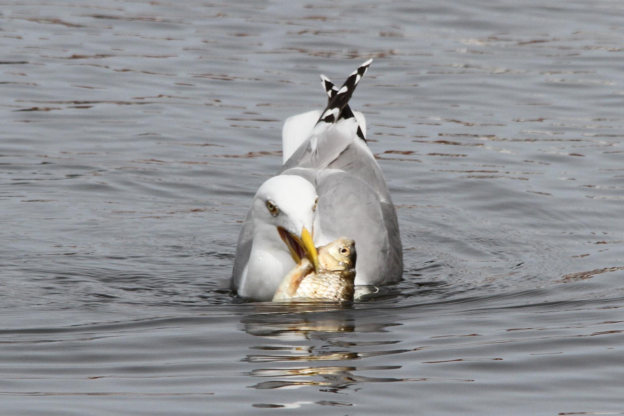 That is my fish by Klaus-Dieter Adamski