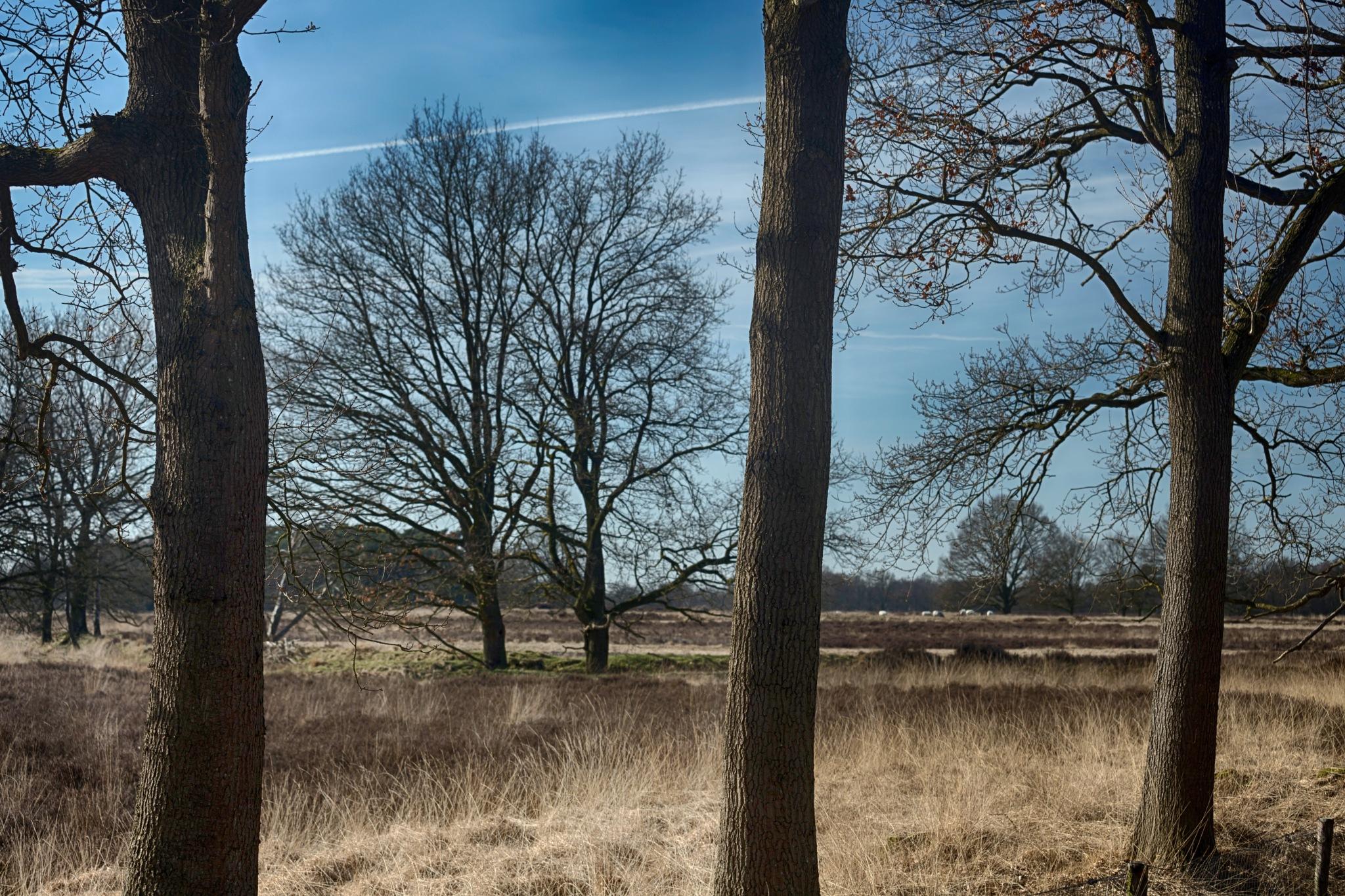 Takkenhoogte, Drenthe, Holland  by HansJongman