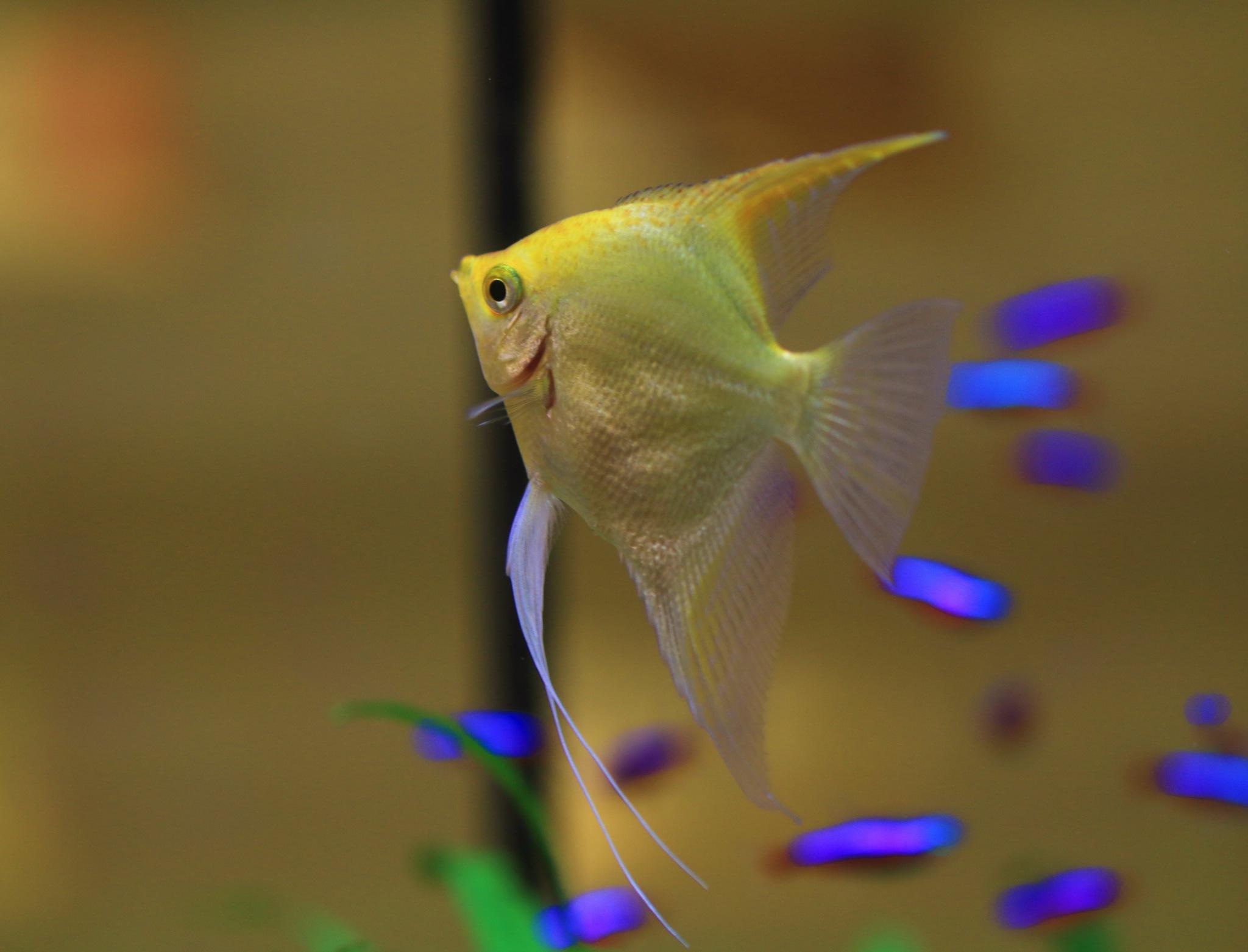 Fish by paul_wallen