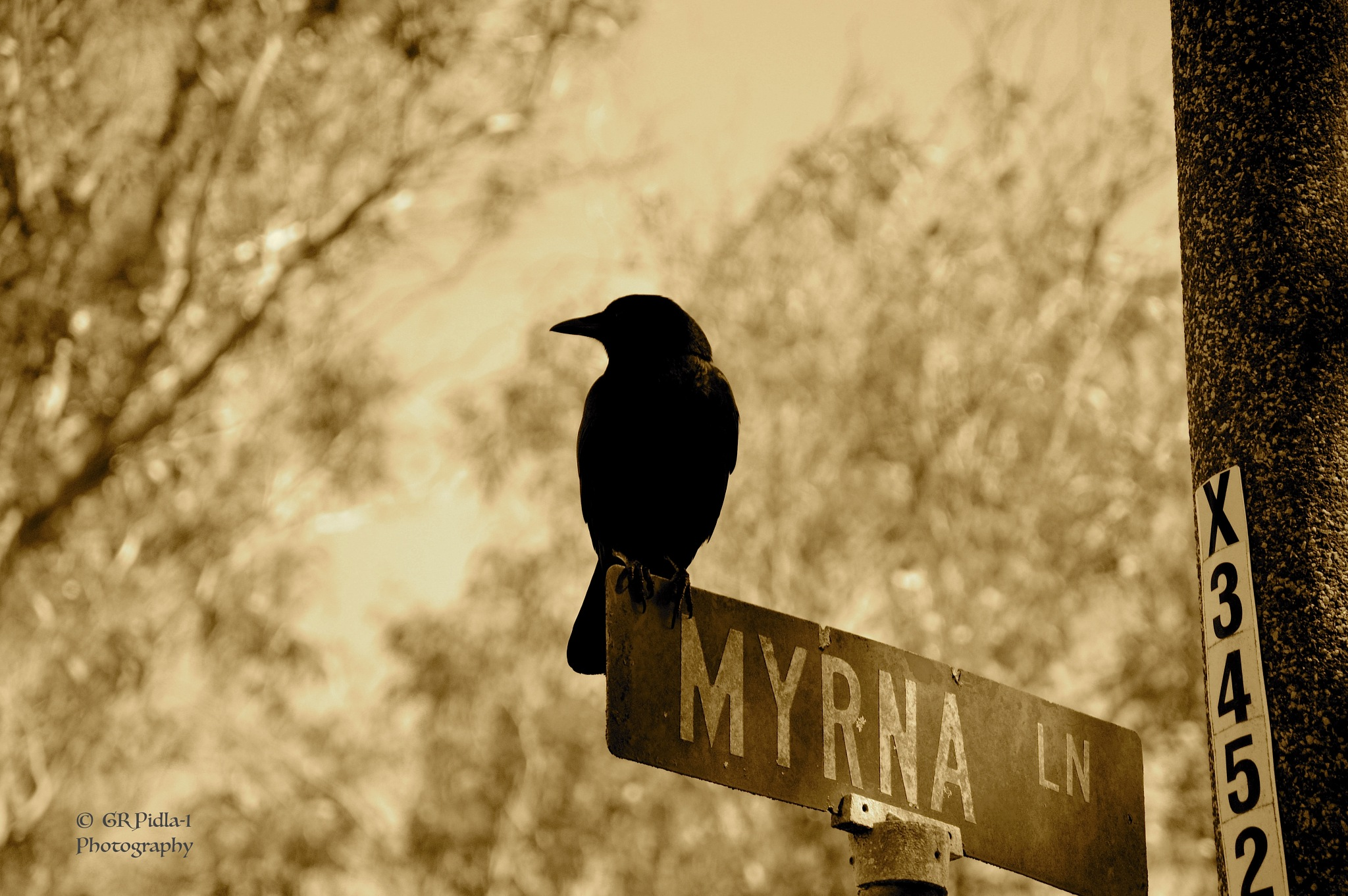The Crow by Gina  Alwaysmile (*_*)