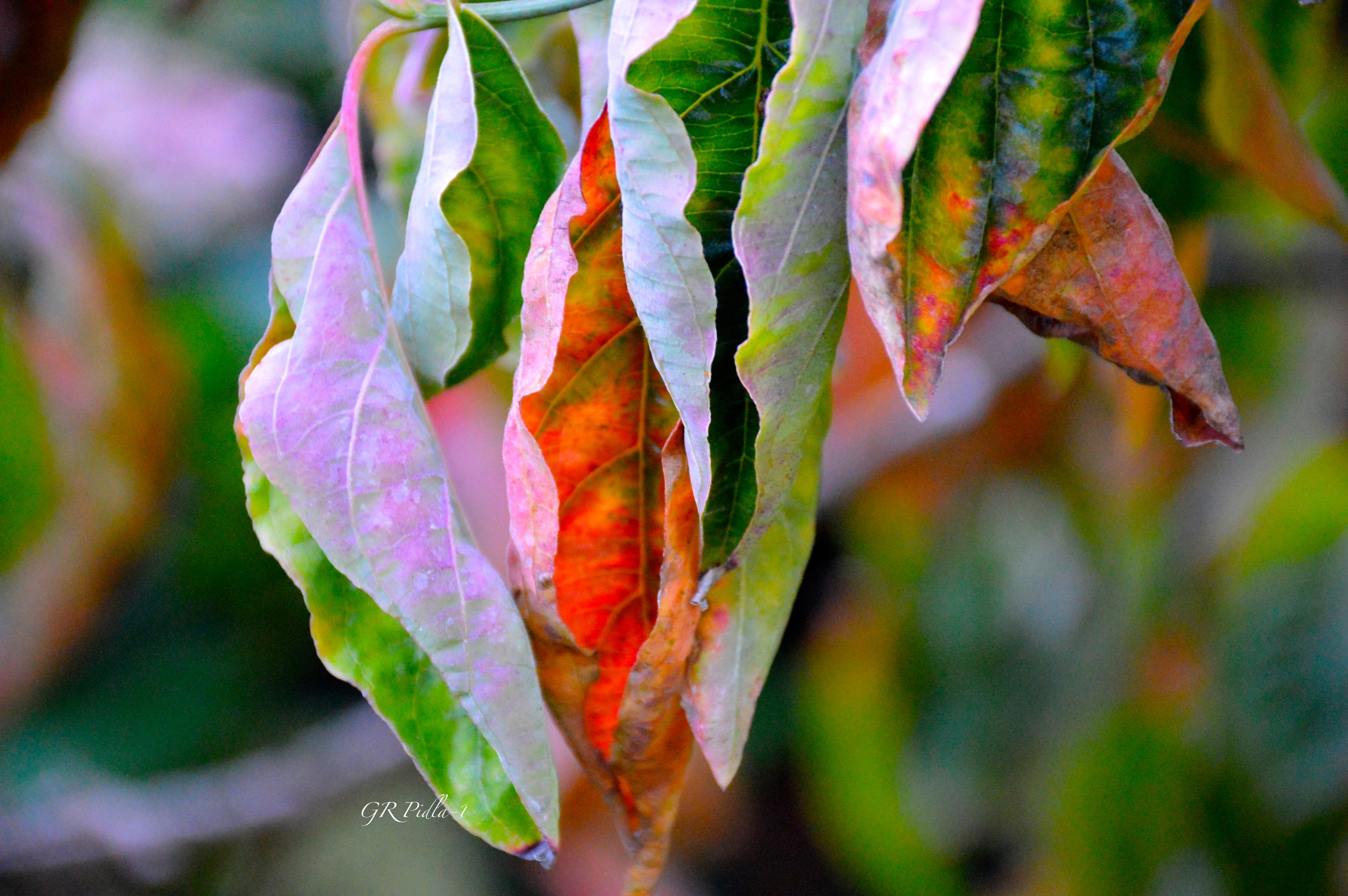 Autumn Paints In Colors That Summer Has Never Seen by Gina  Alwaysmile (*_*)