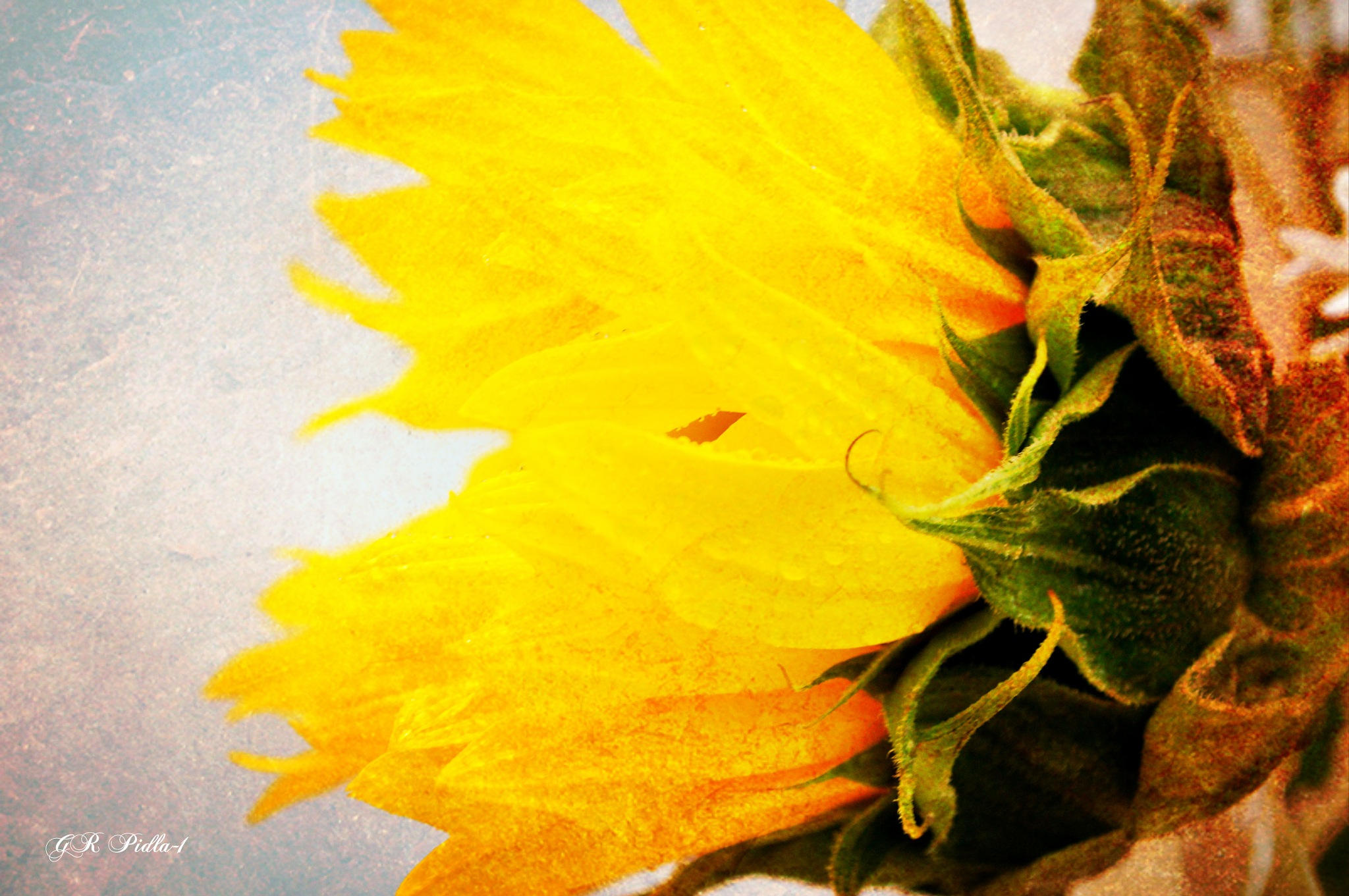 When Words Escape, Flowers Speak by Gina  Alwaysmile (*_*)