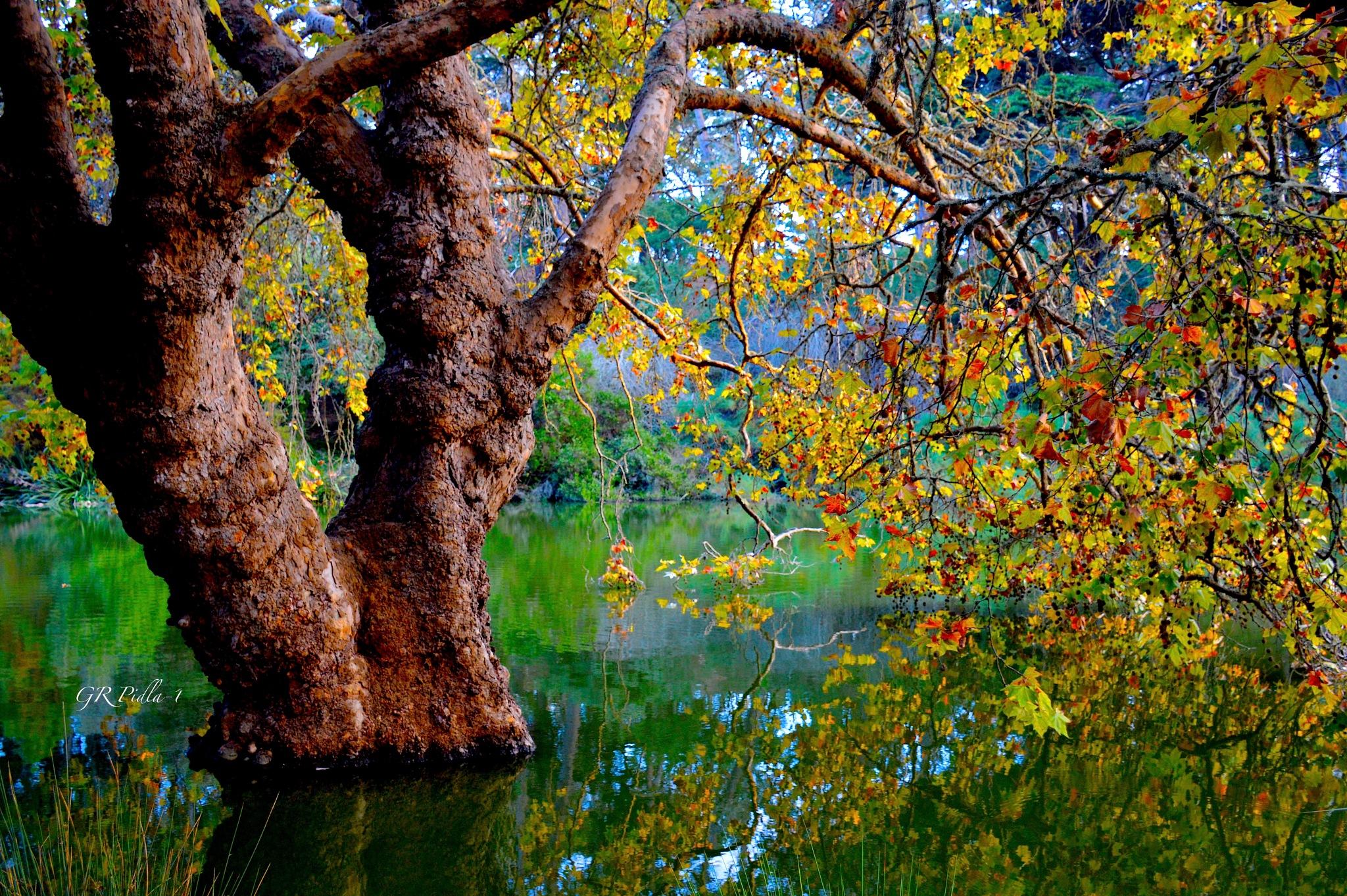 REFLECTION by Gina  Alwaysmile (*_*)
