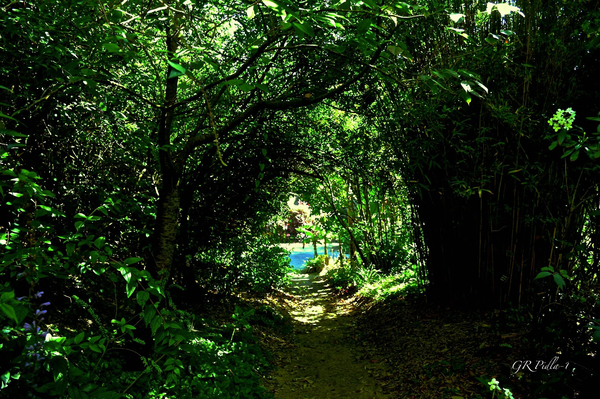 Path by Gina  Alwaysmile (*_*)