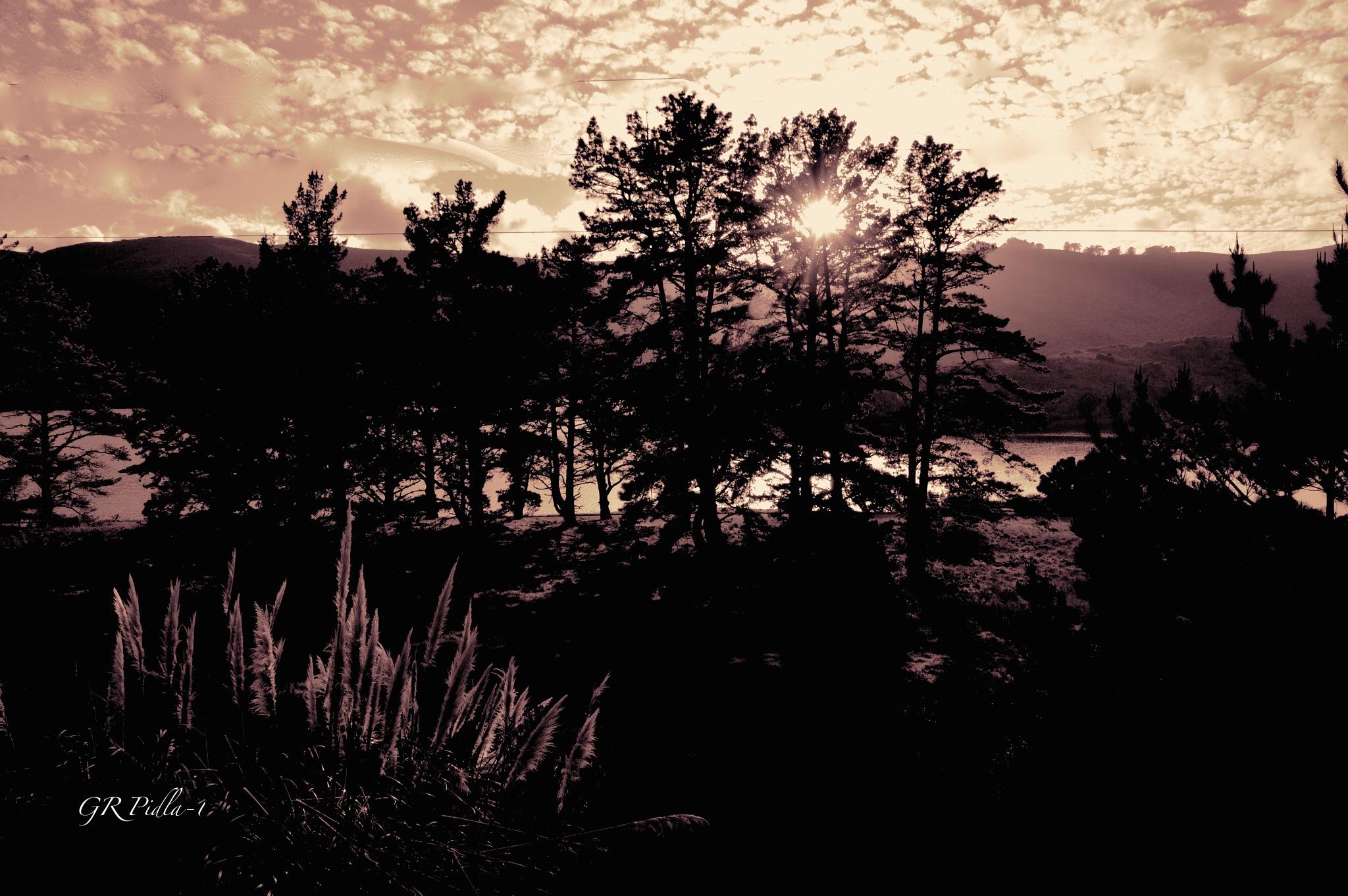 Nature Walk by Gina  Alwaysmile (*_*)
