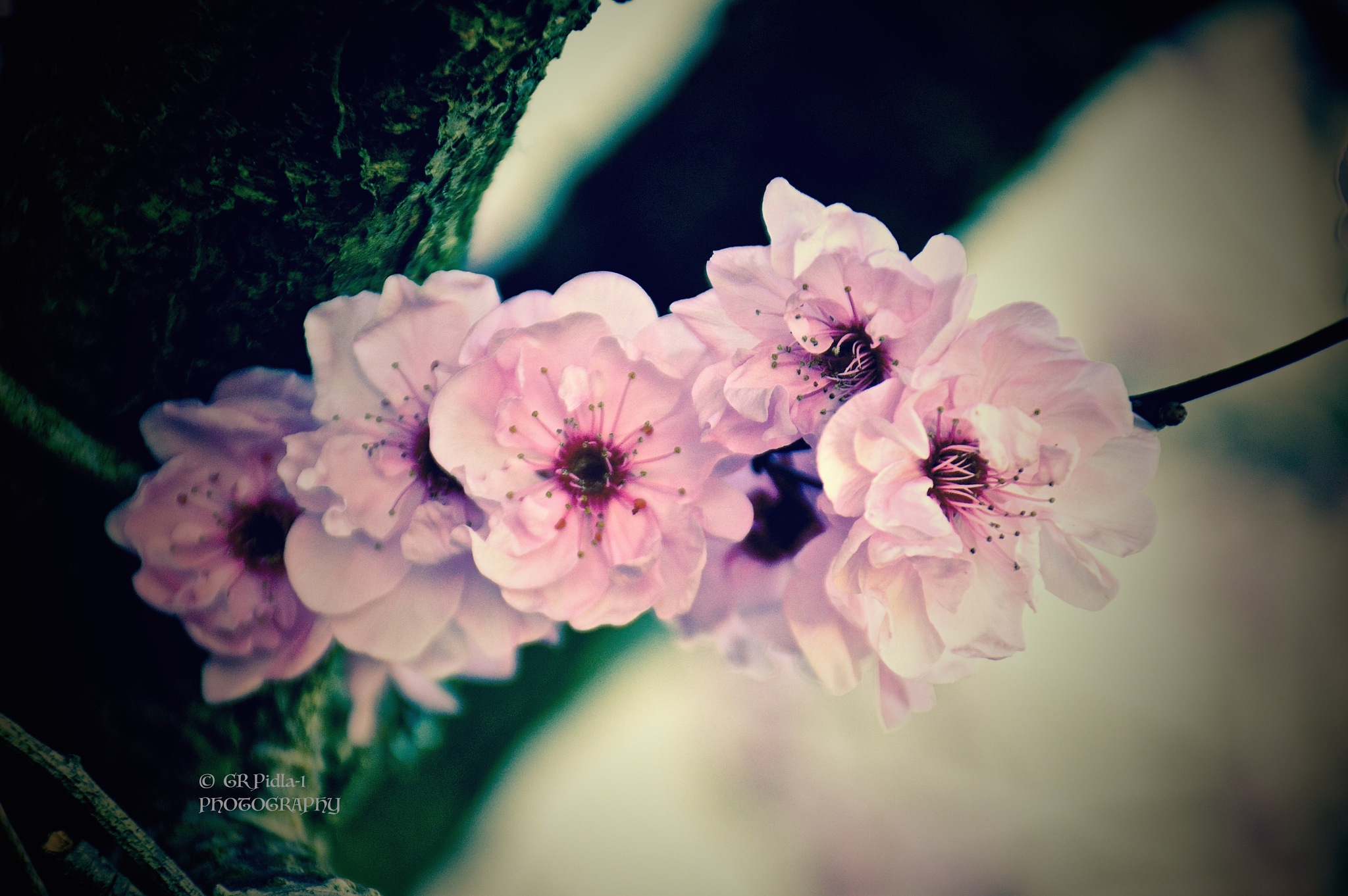 LIVE LIFE IN FULL BLOOM by Gina  Alwaysmile (*_*)