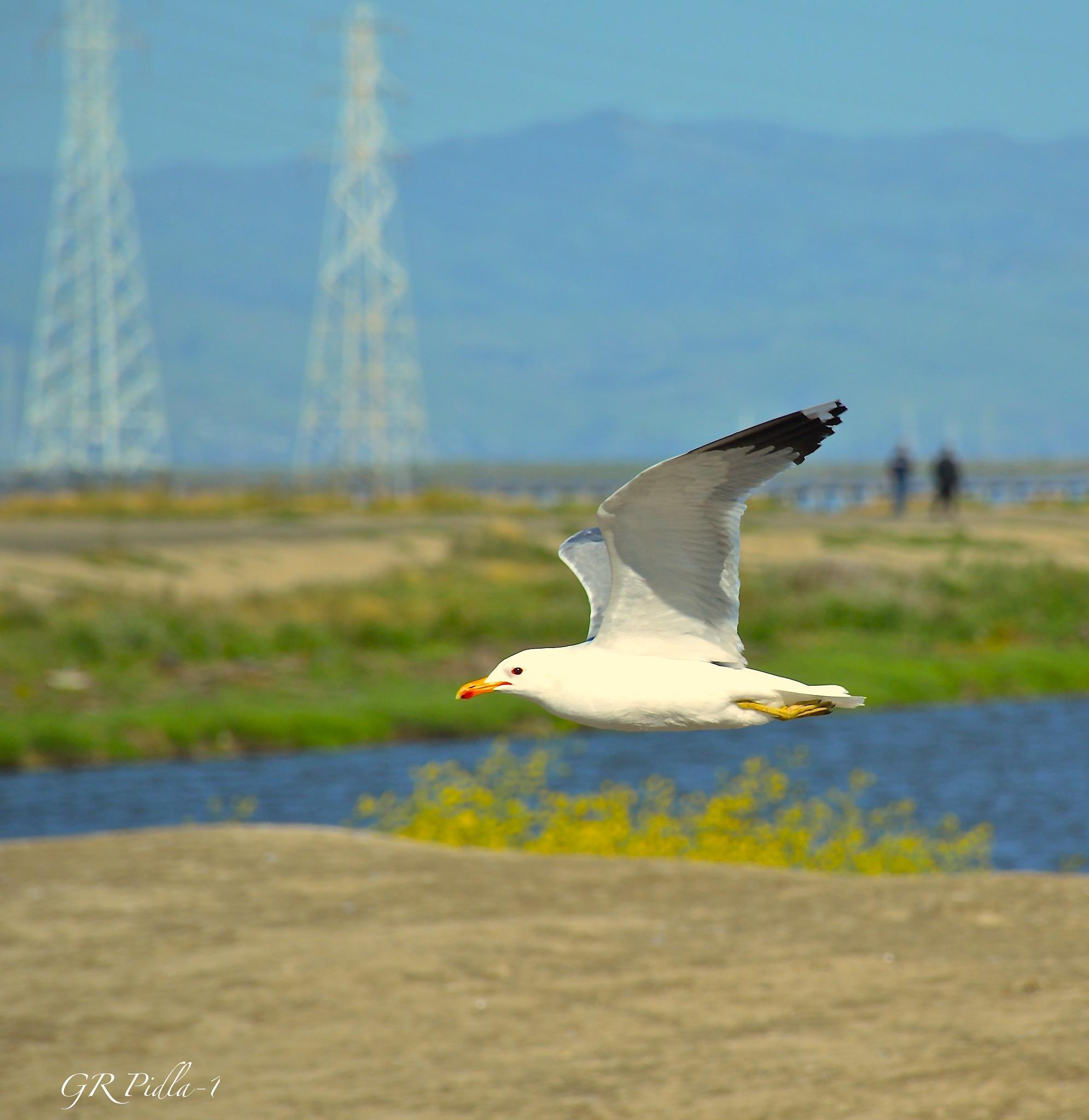 FLY by Gina  Alwaysmile (*_*)