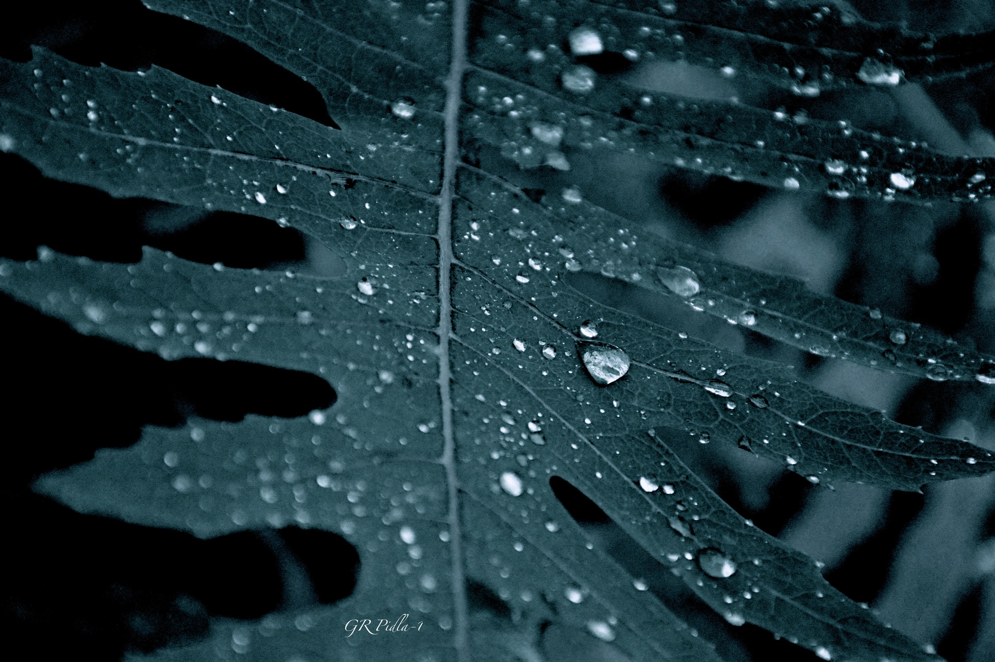 Pearly Dew Drops by Gina  Alwaysmile (*_*)