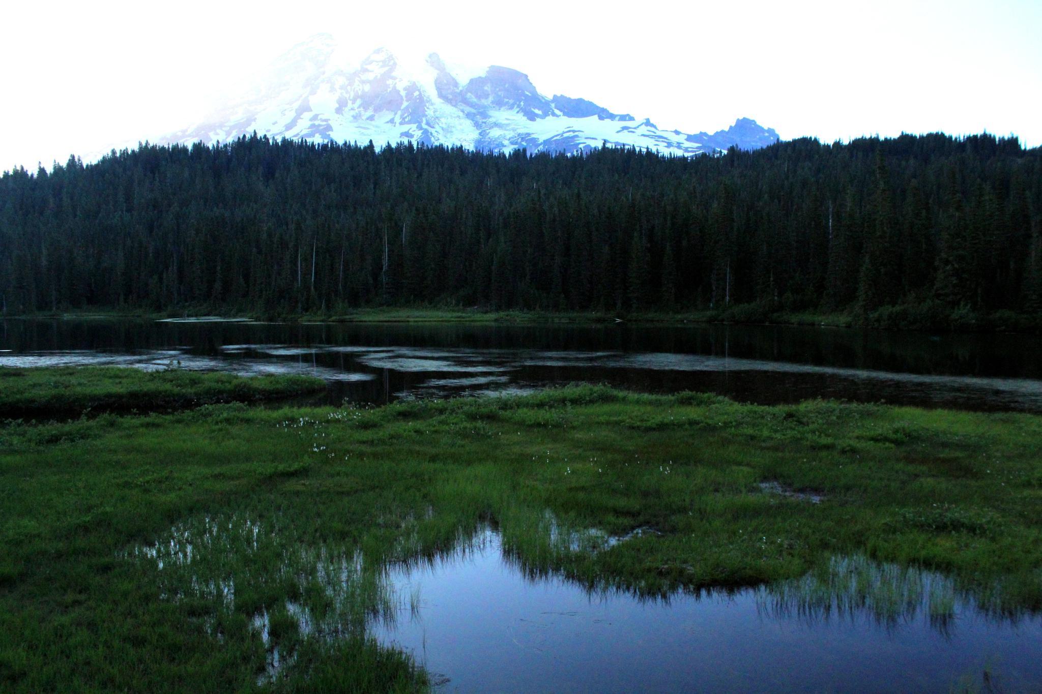 Mount Rainier Medows by JosephParker