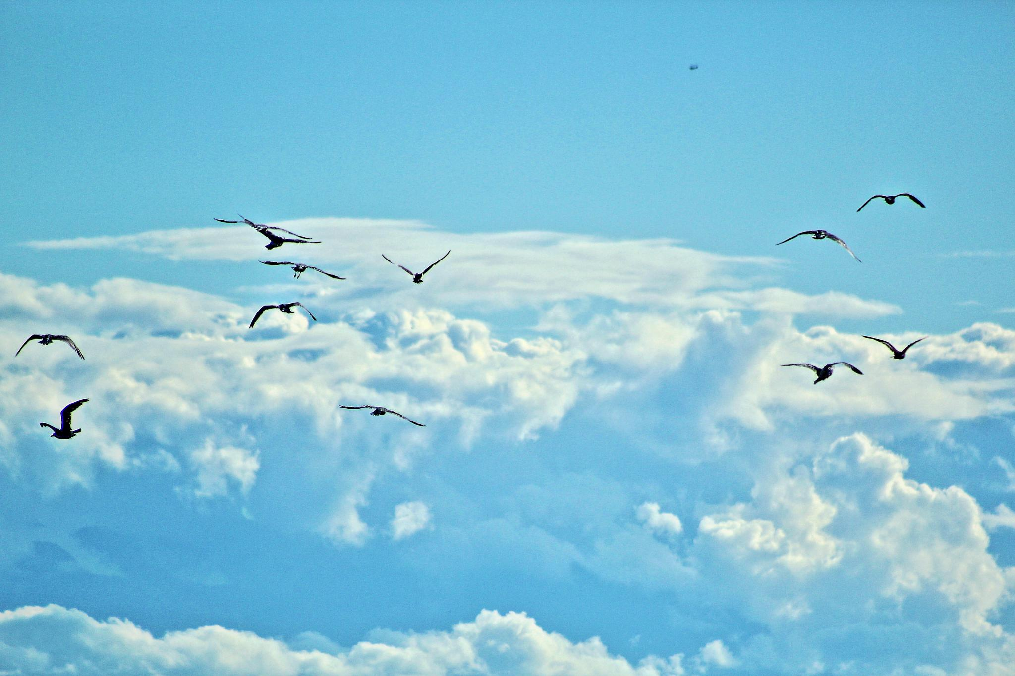 Lets Fly! by JosephParker